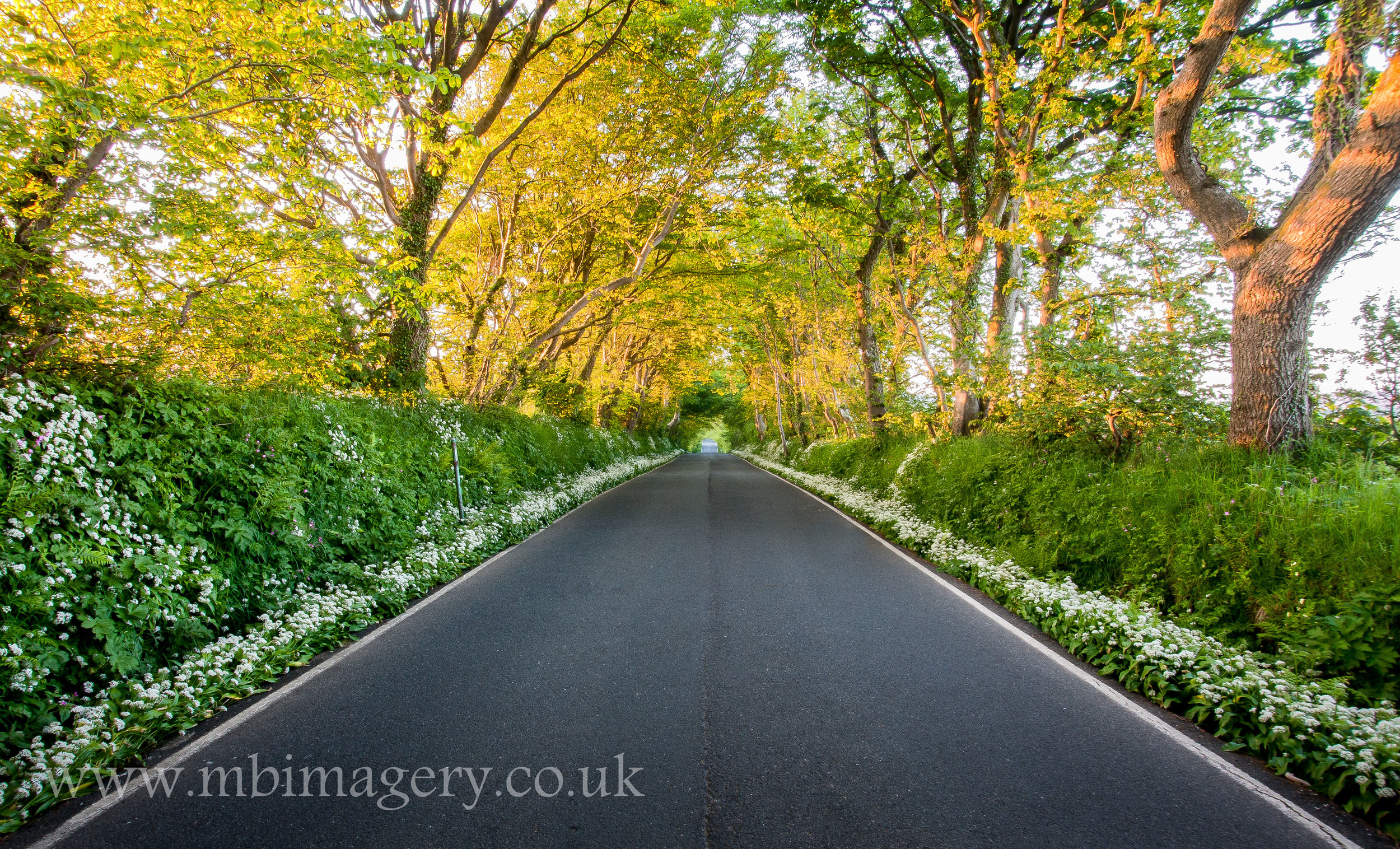 Garlic Road