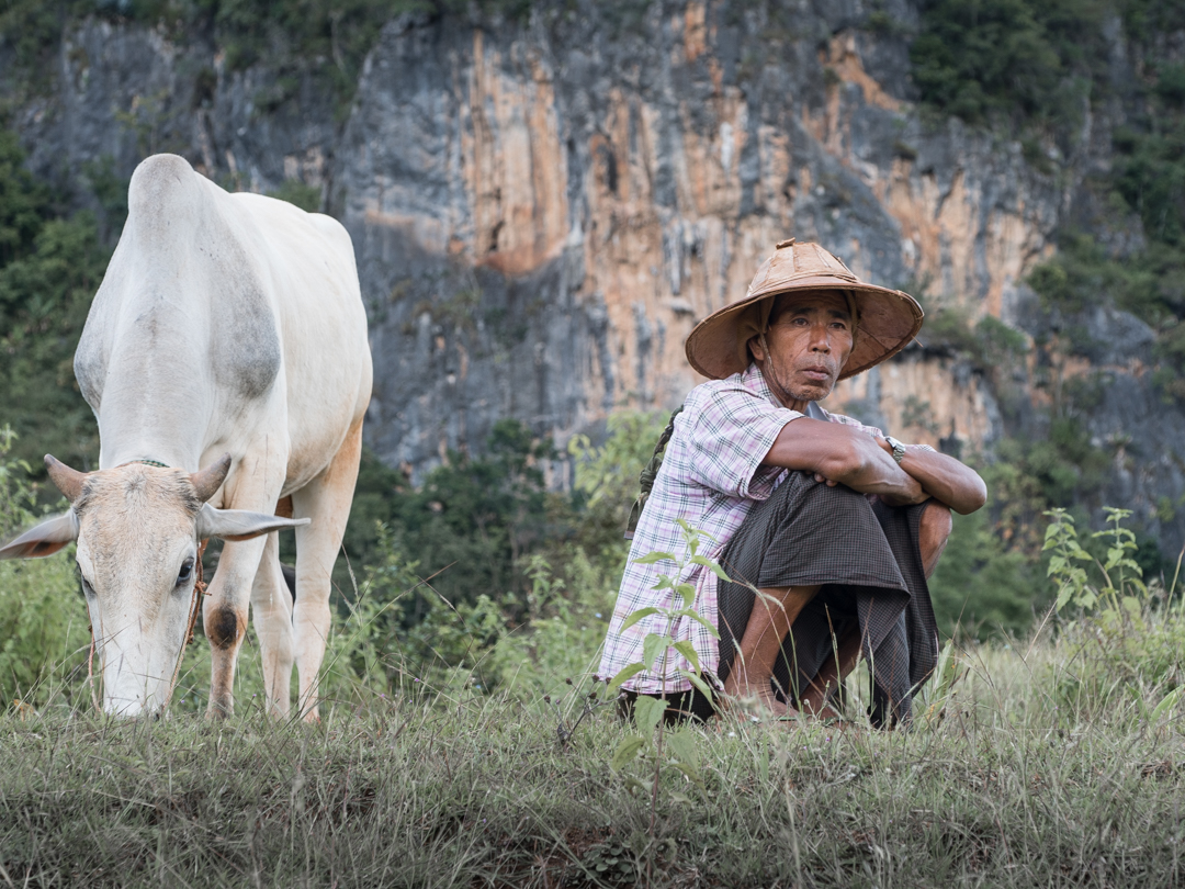 Waiting with his cow.