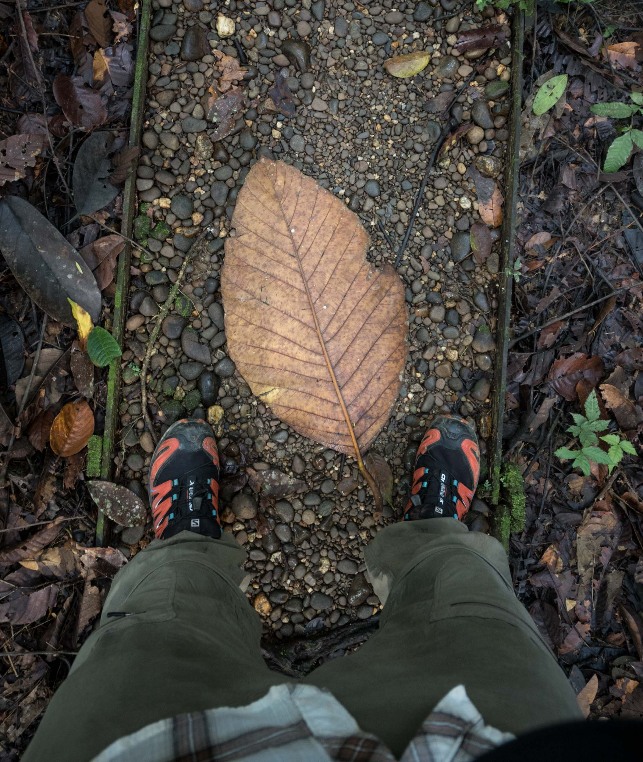 Really massive leaf.... Could easily be one of ours back home except for the size!