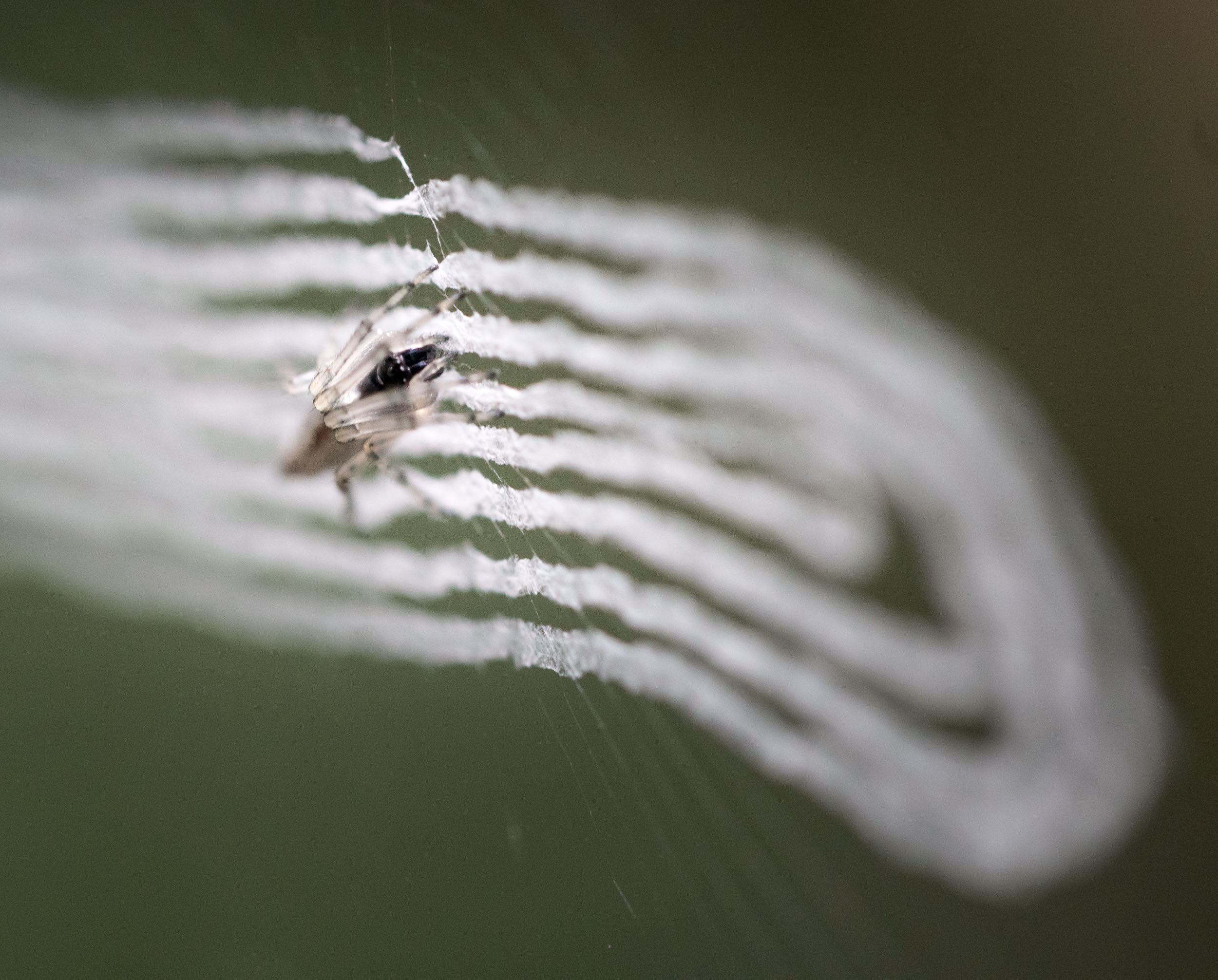 This tiny spider and his funky web were on the railings as I walked up the watch tower.....