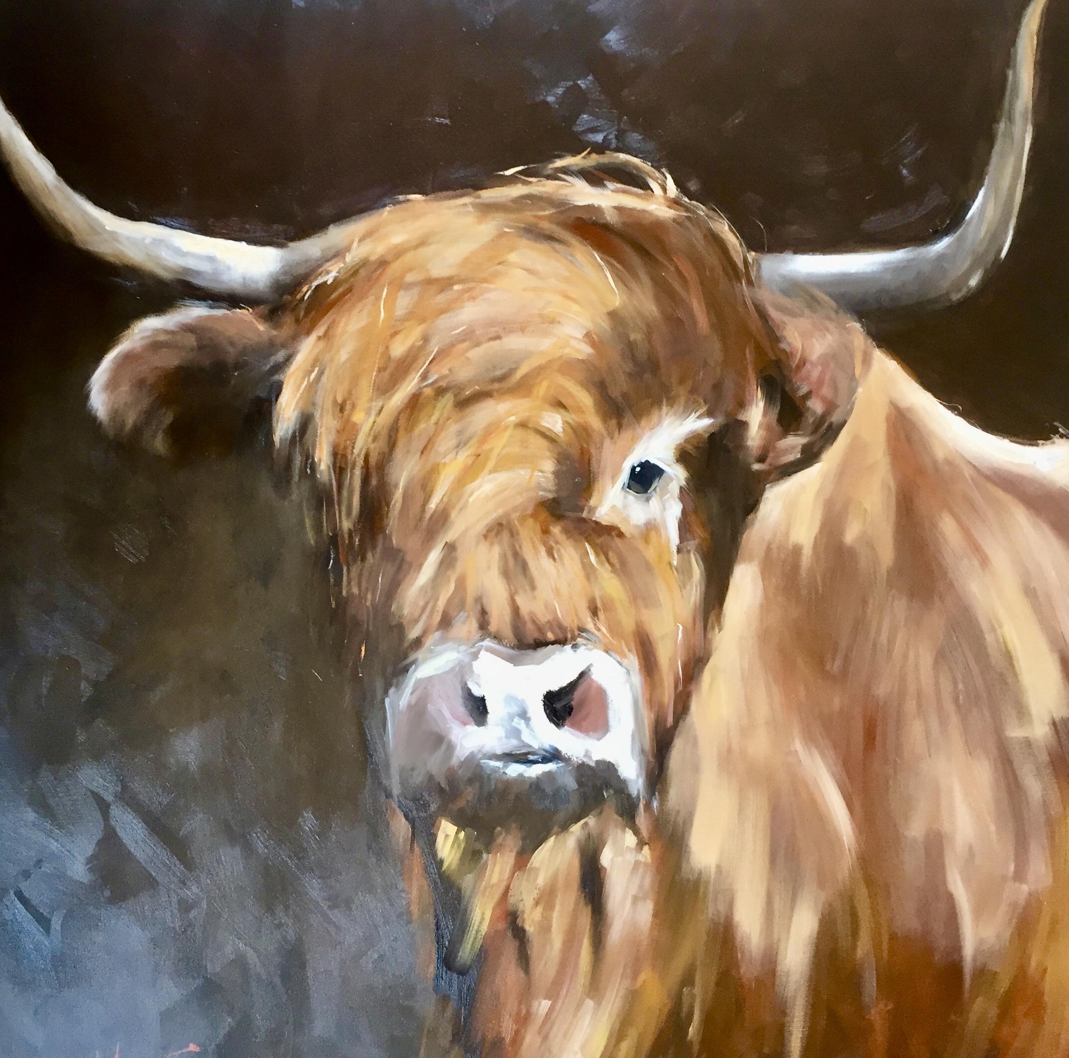Highland cattle series #1