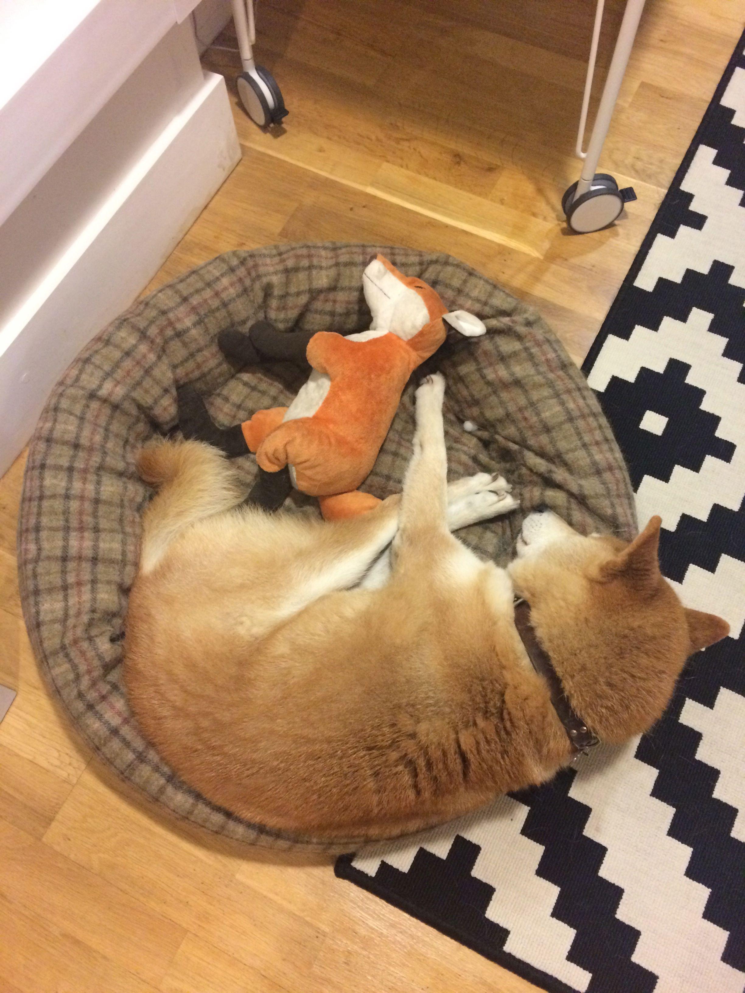 Alfie & Friend Sleeping.jpg