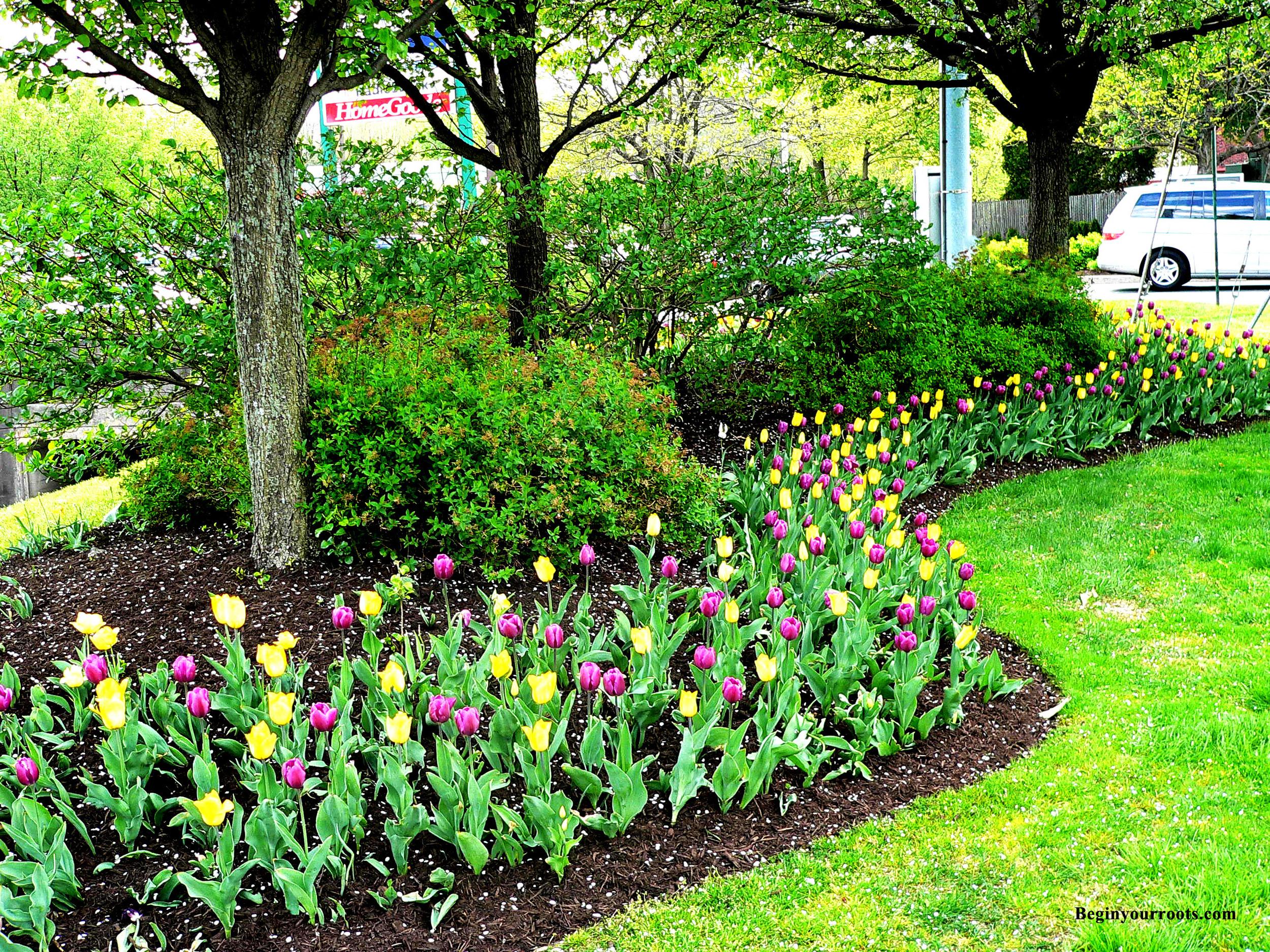 flowers_commercial_1_fullsize.jpg