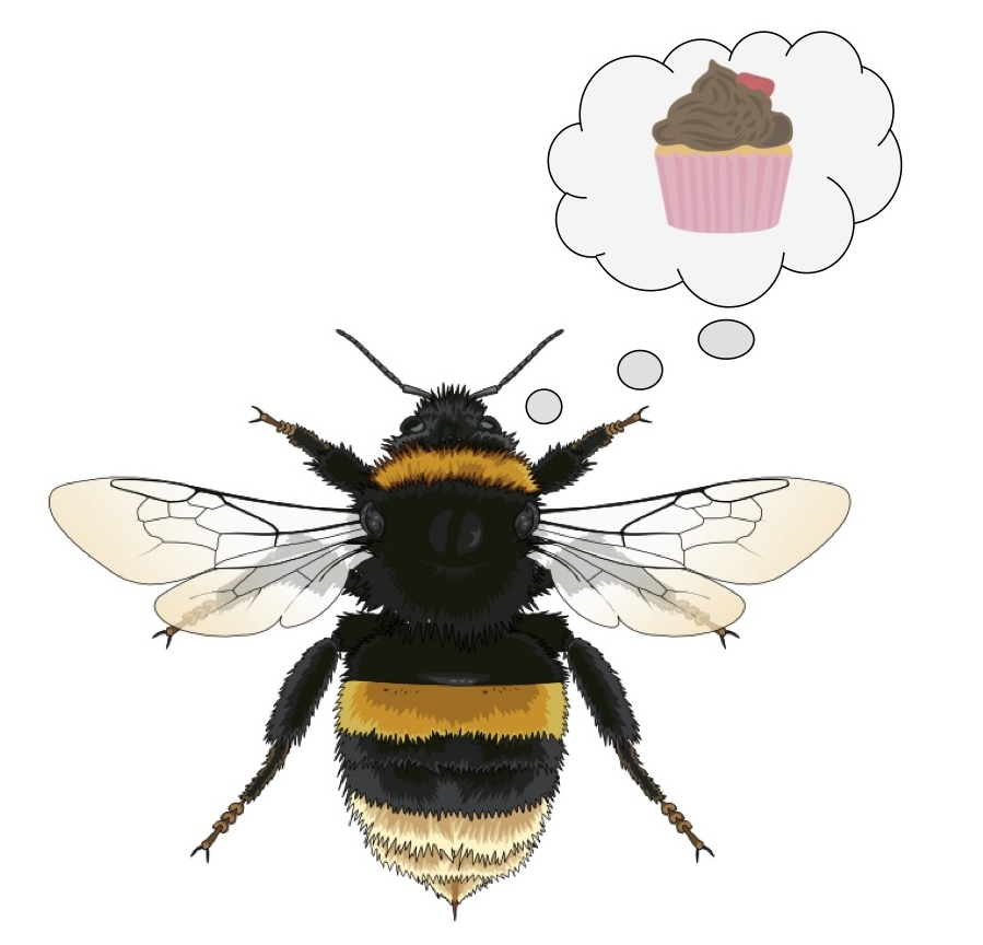 A  Bombus terrestris  with an optimistic outlook. Bee by  Quiet Magpie .