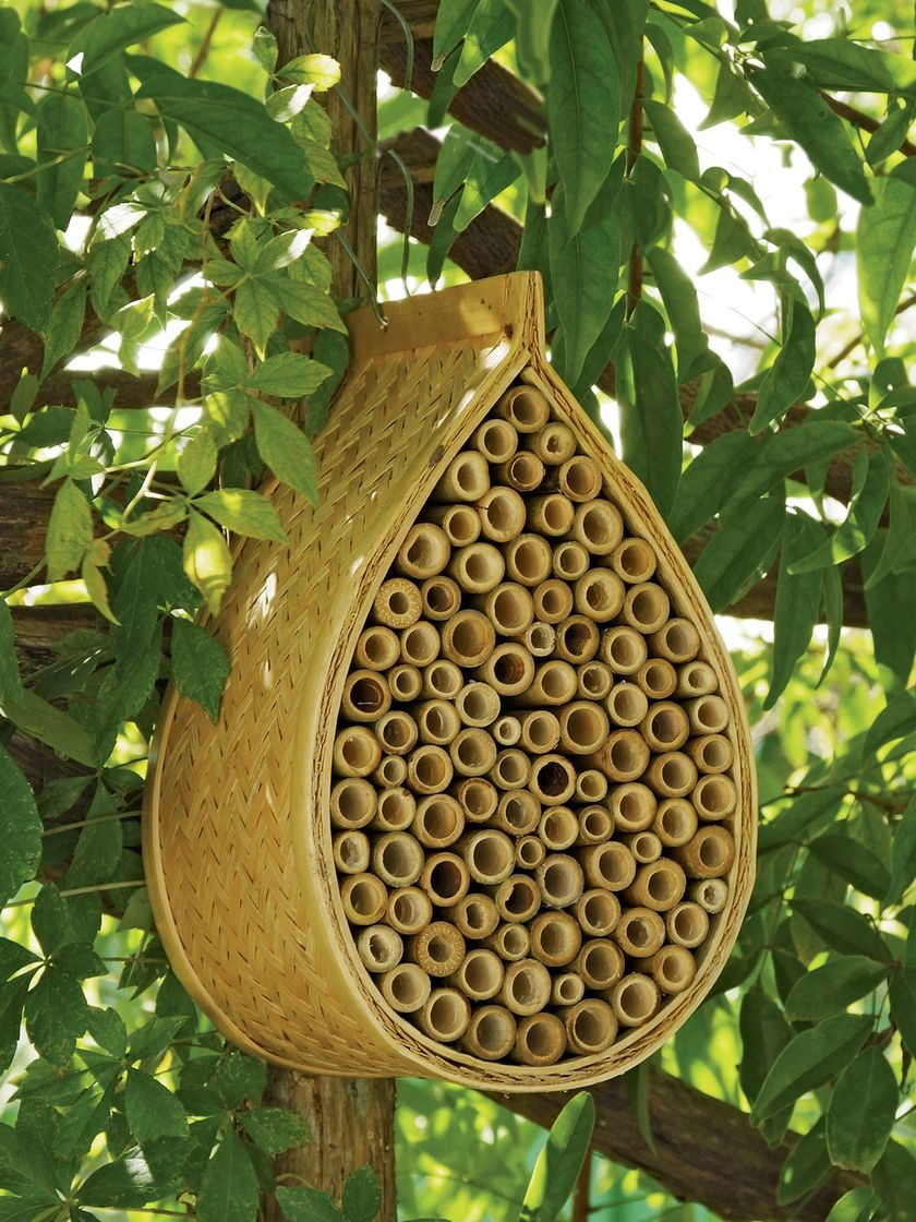 Mason bee house for sale from gardening shops