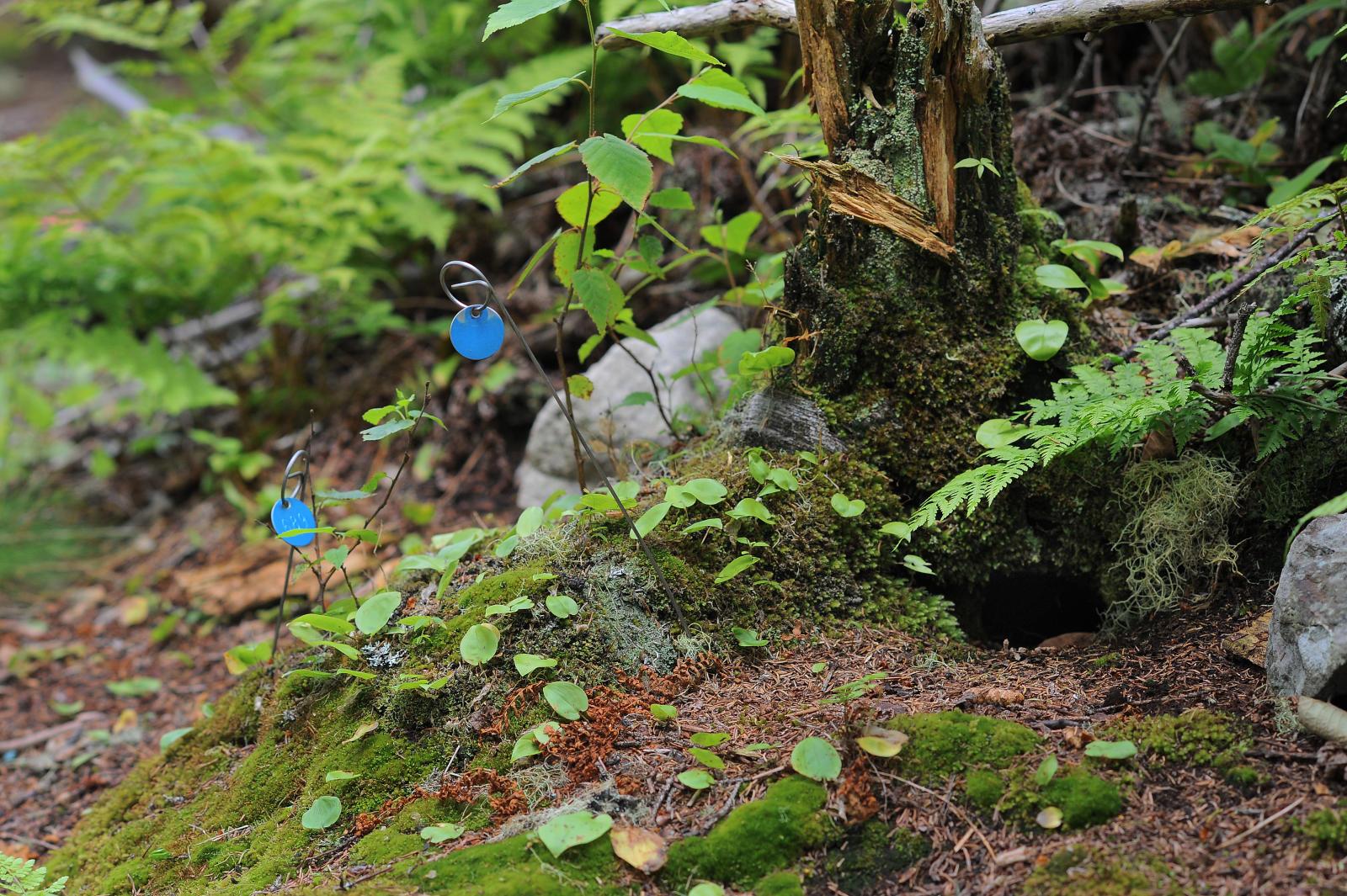 Petrel burrow on Kent Island, photo by Fred Field