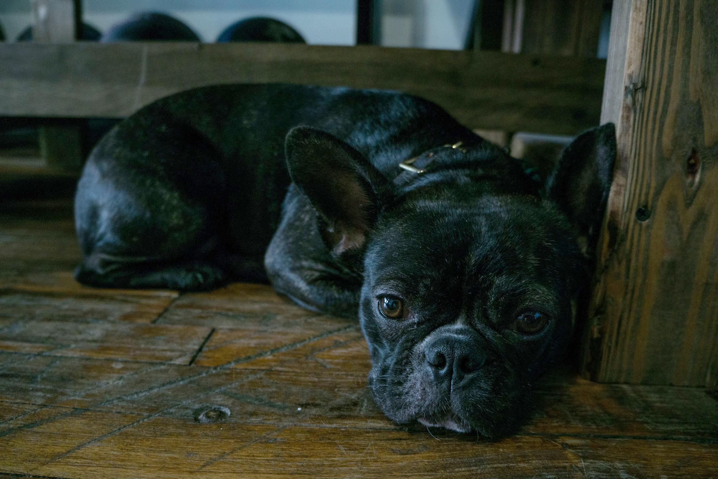 vickygood_photography_dog_series.jpg