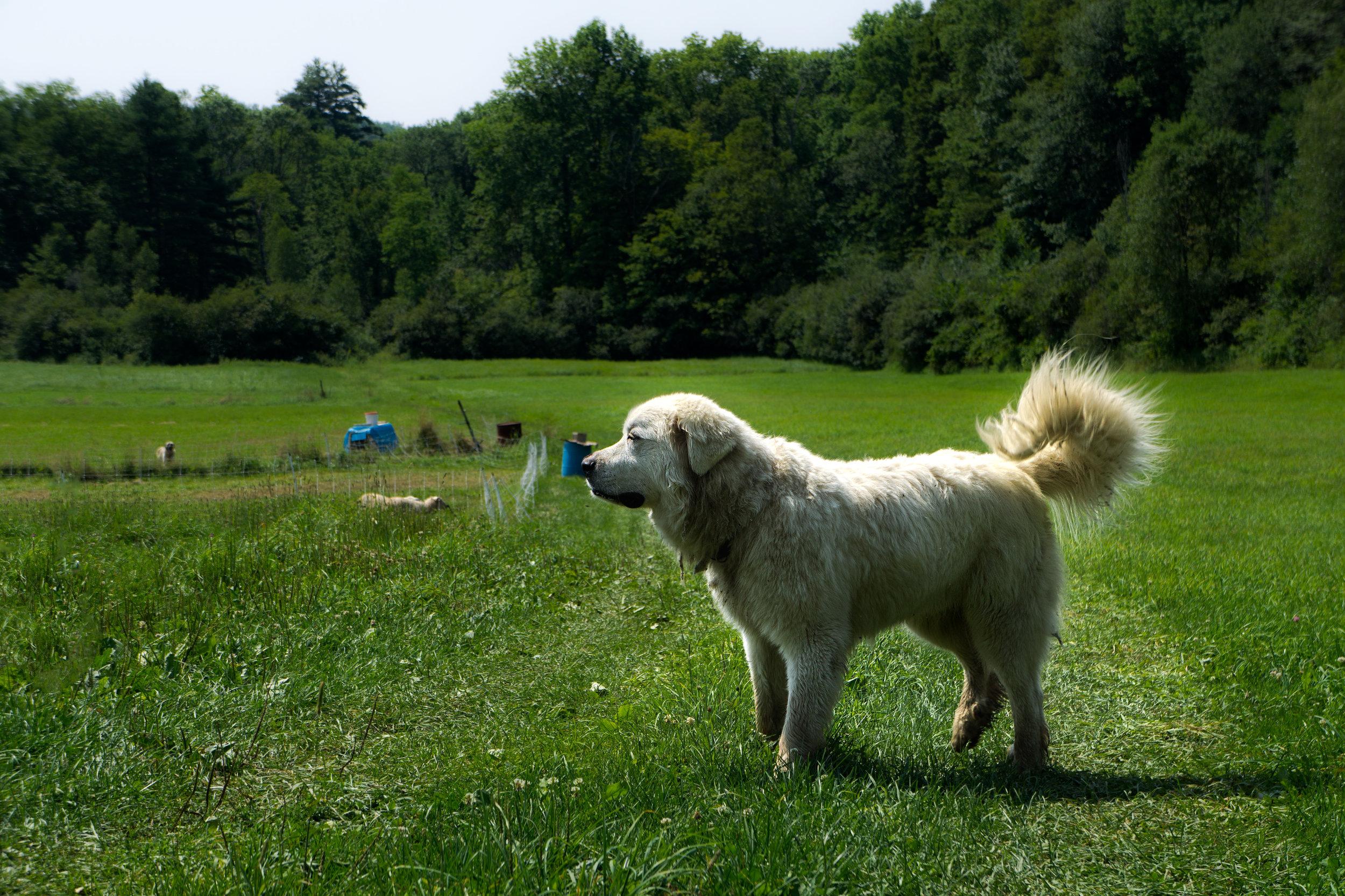 vickygood_photography_dog_series5.jpg