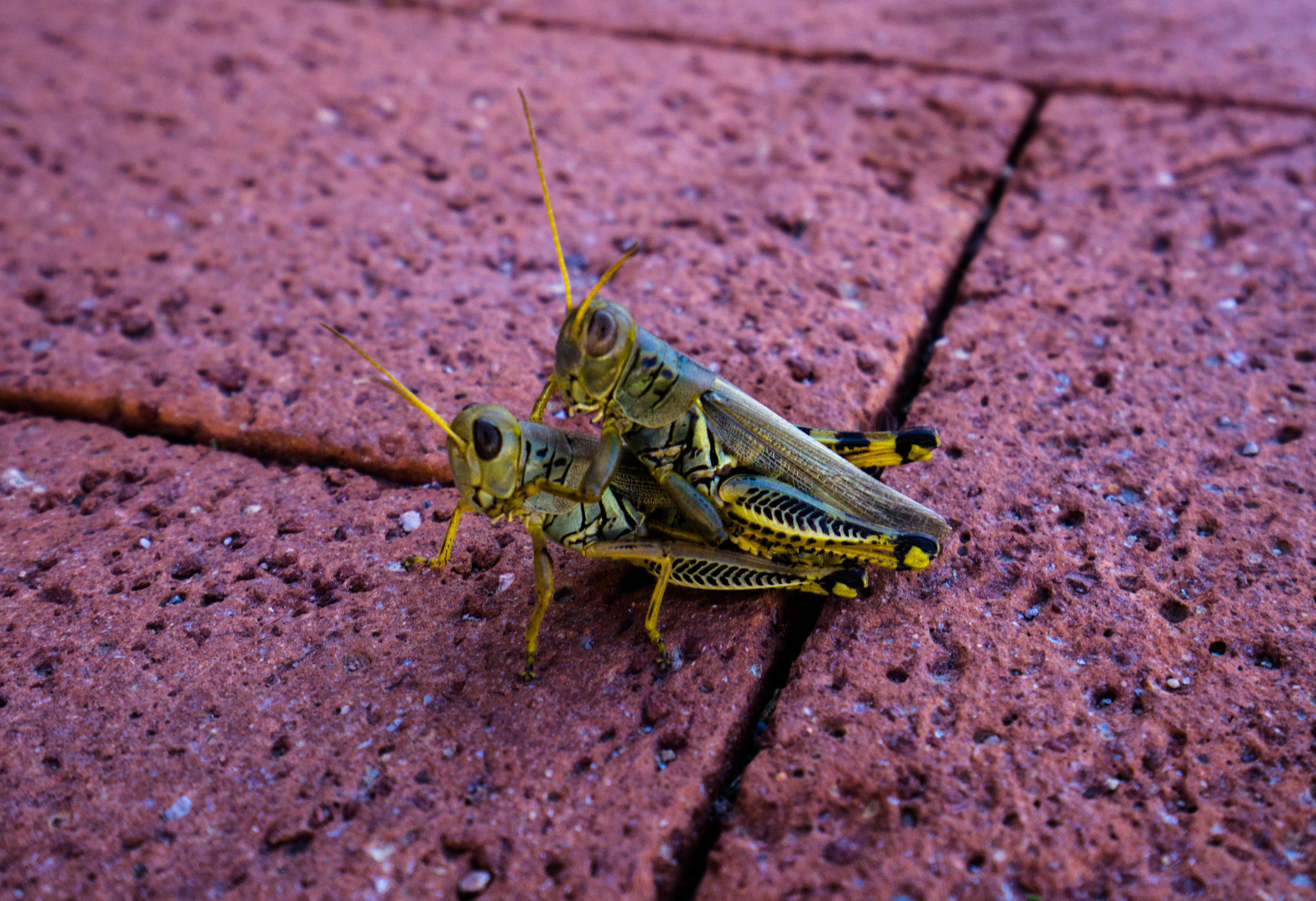 vickygood_photography_nature_grasshoppers.jpg