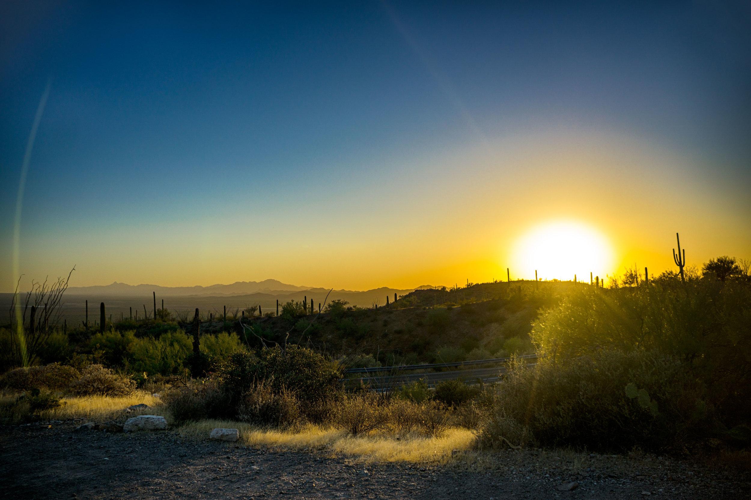vickygood_photography_nature_saguaro-park.jpg