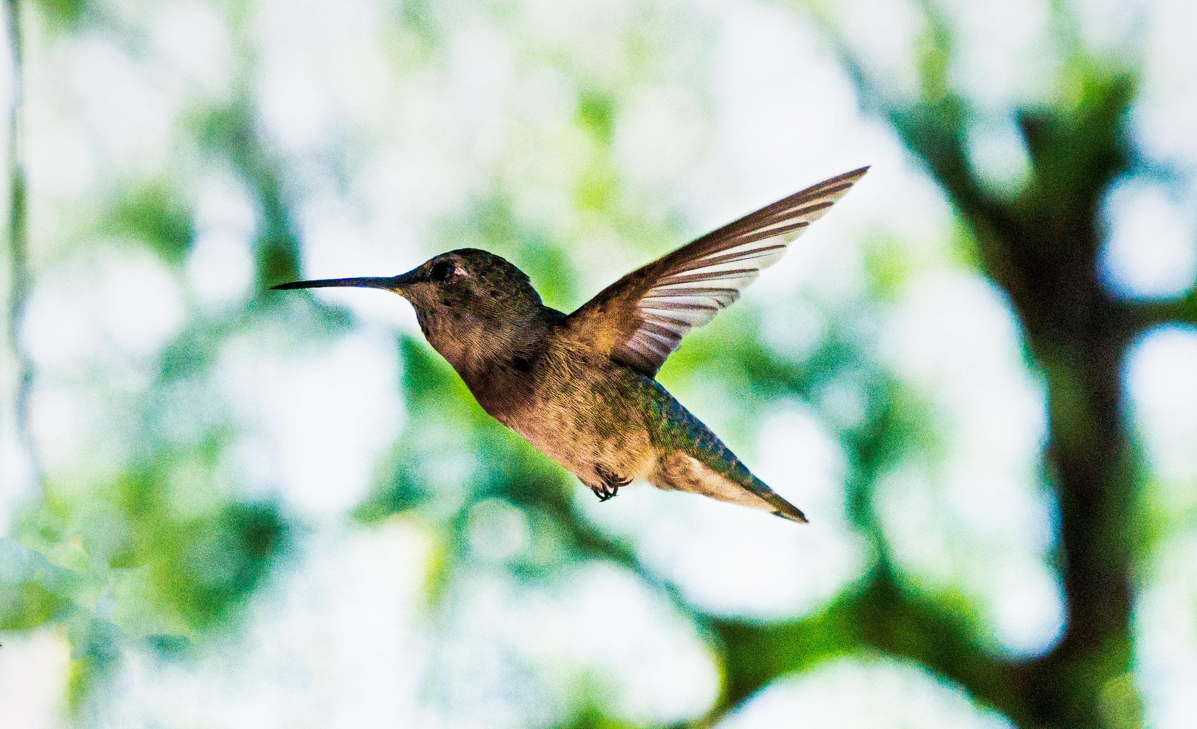 vickygood_photography_nature_hummingbird.jpg