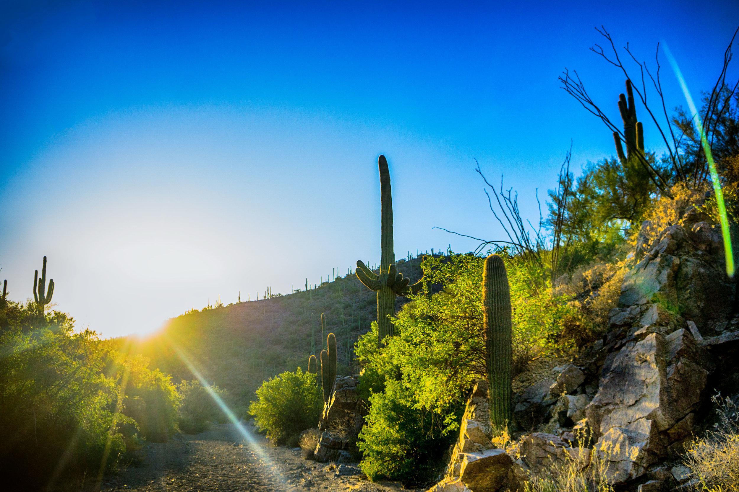 vickygood_photography_nature_saguaro-park3.jpg
