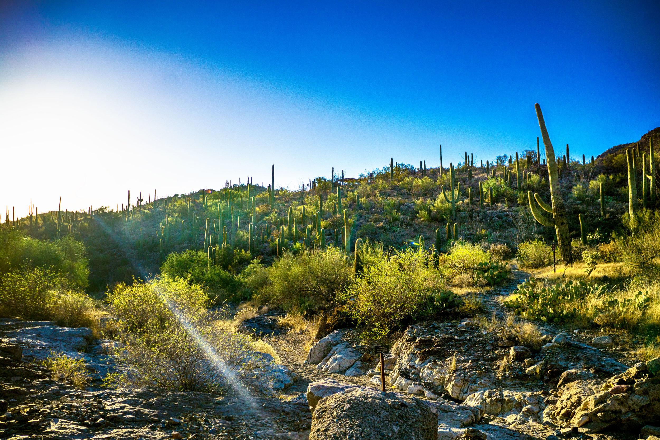 vickygood_photography_nature_saguaro-park4.jpg