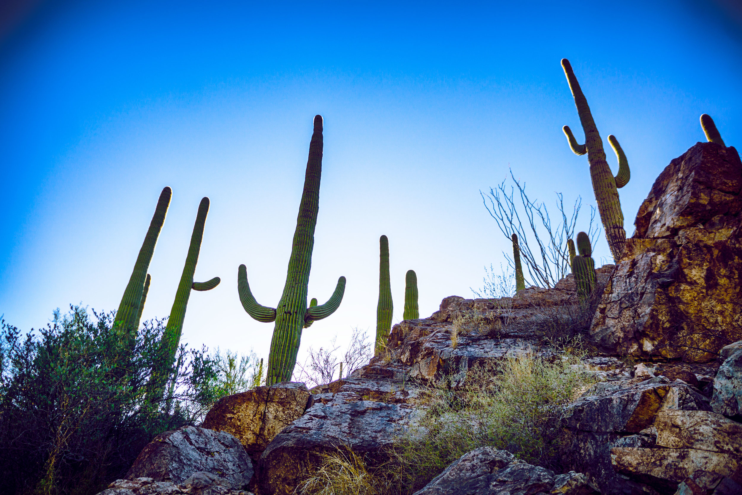 vickygood_photography_nature_saguaro-park14.jpg