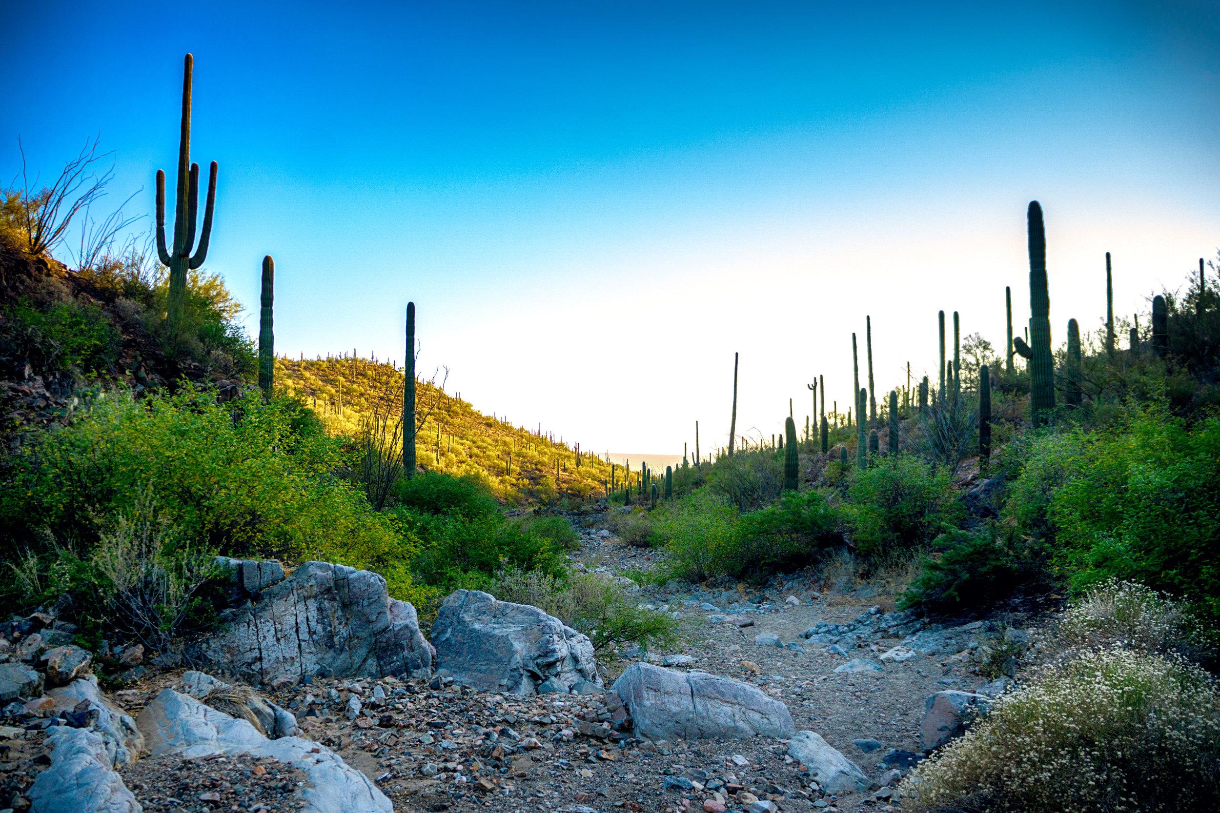 vickygood_photography_nature_saguaro-park2.jpg