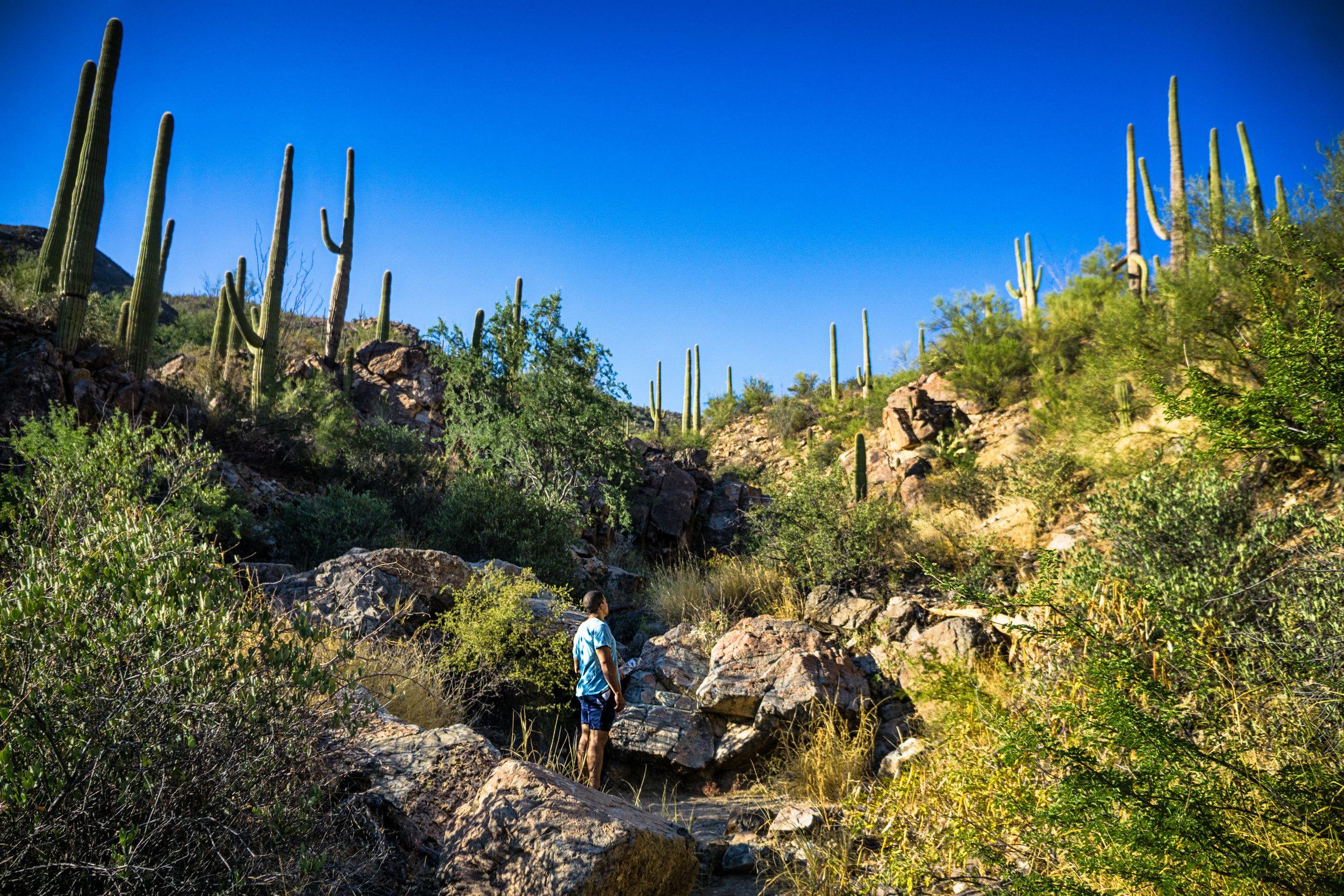 vickygood_photography_nature_saguaro-park5.jpg