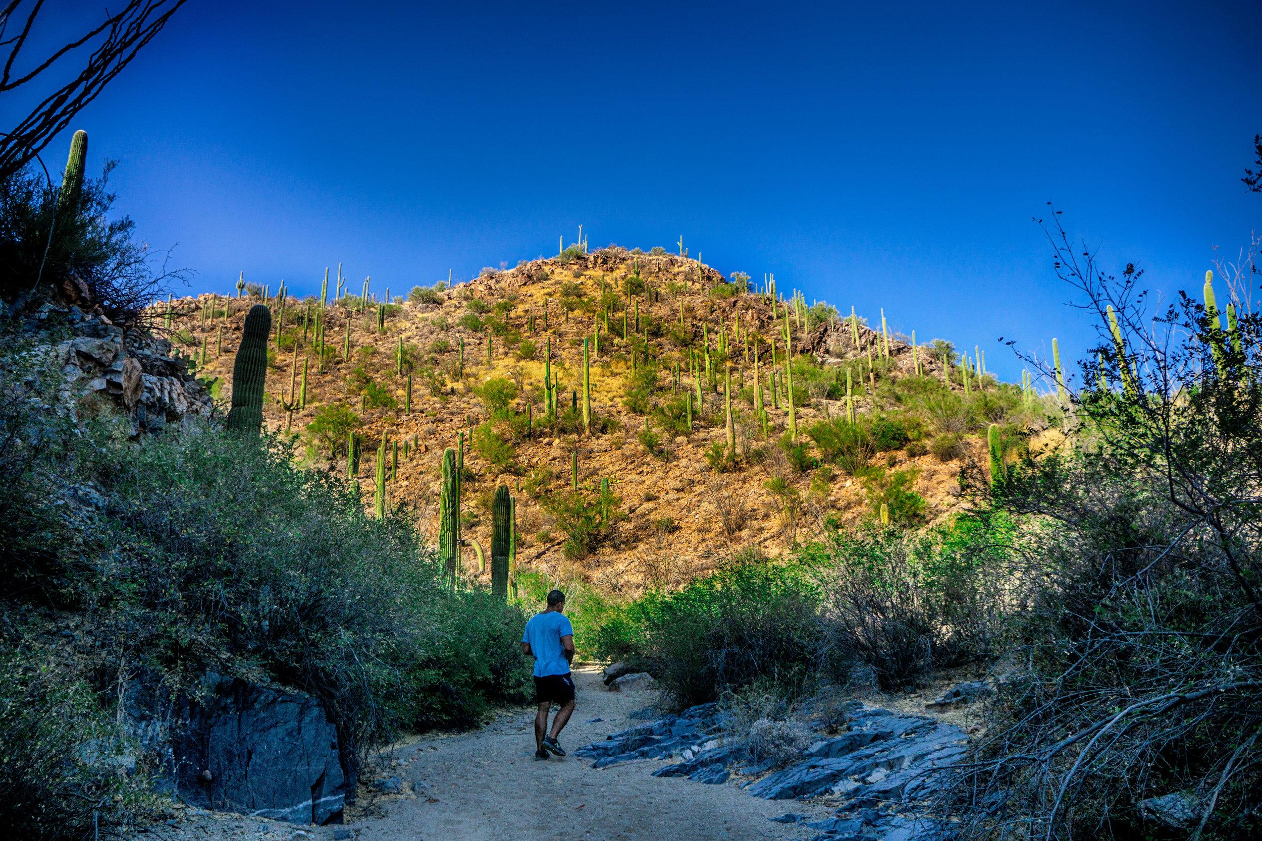 vickygood_photography_nature_saguaro-park7.jpg