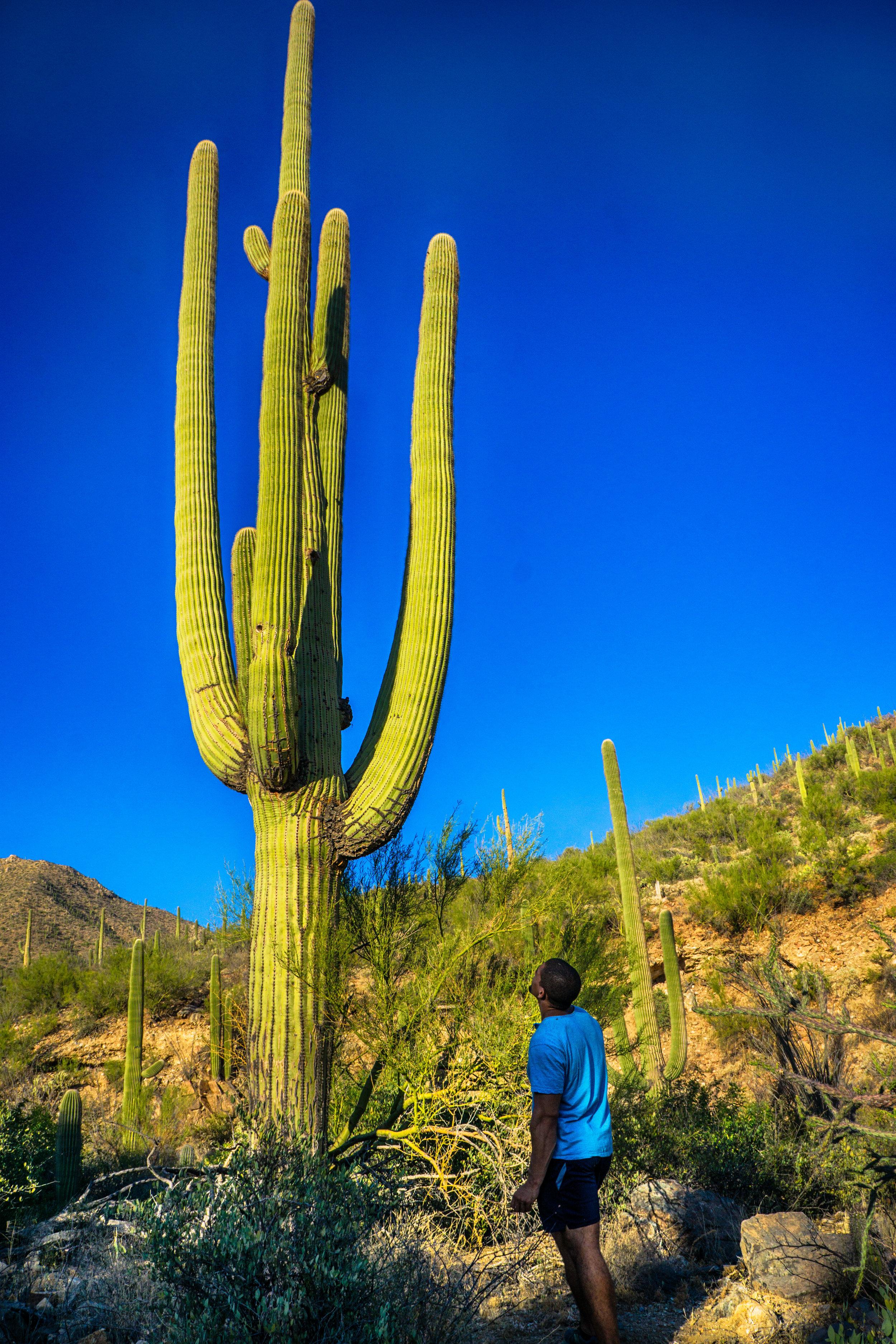 vickygood_photography_nature_saguaro-park8.jpg