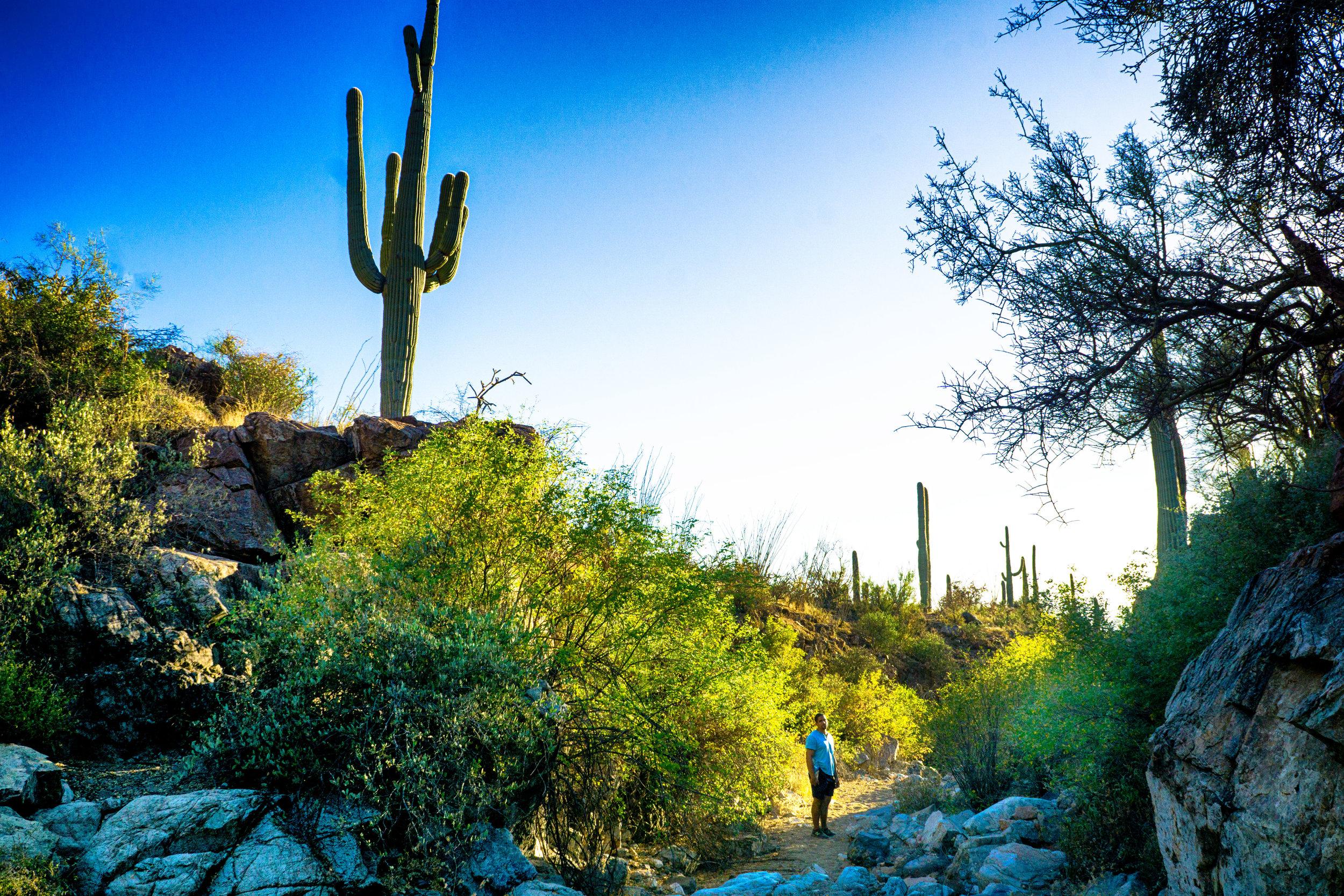 vickygood_photography_nature_saguaro-park9.jpg