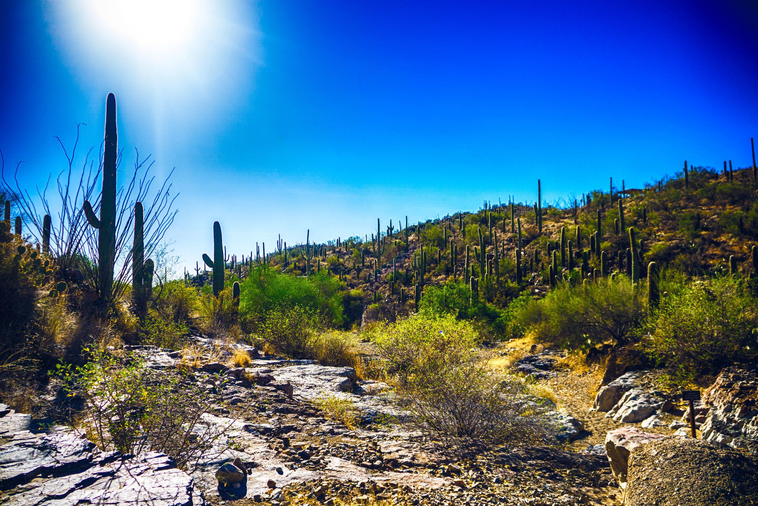 vickygood_photography_nature_saguaro-park12.jpg