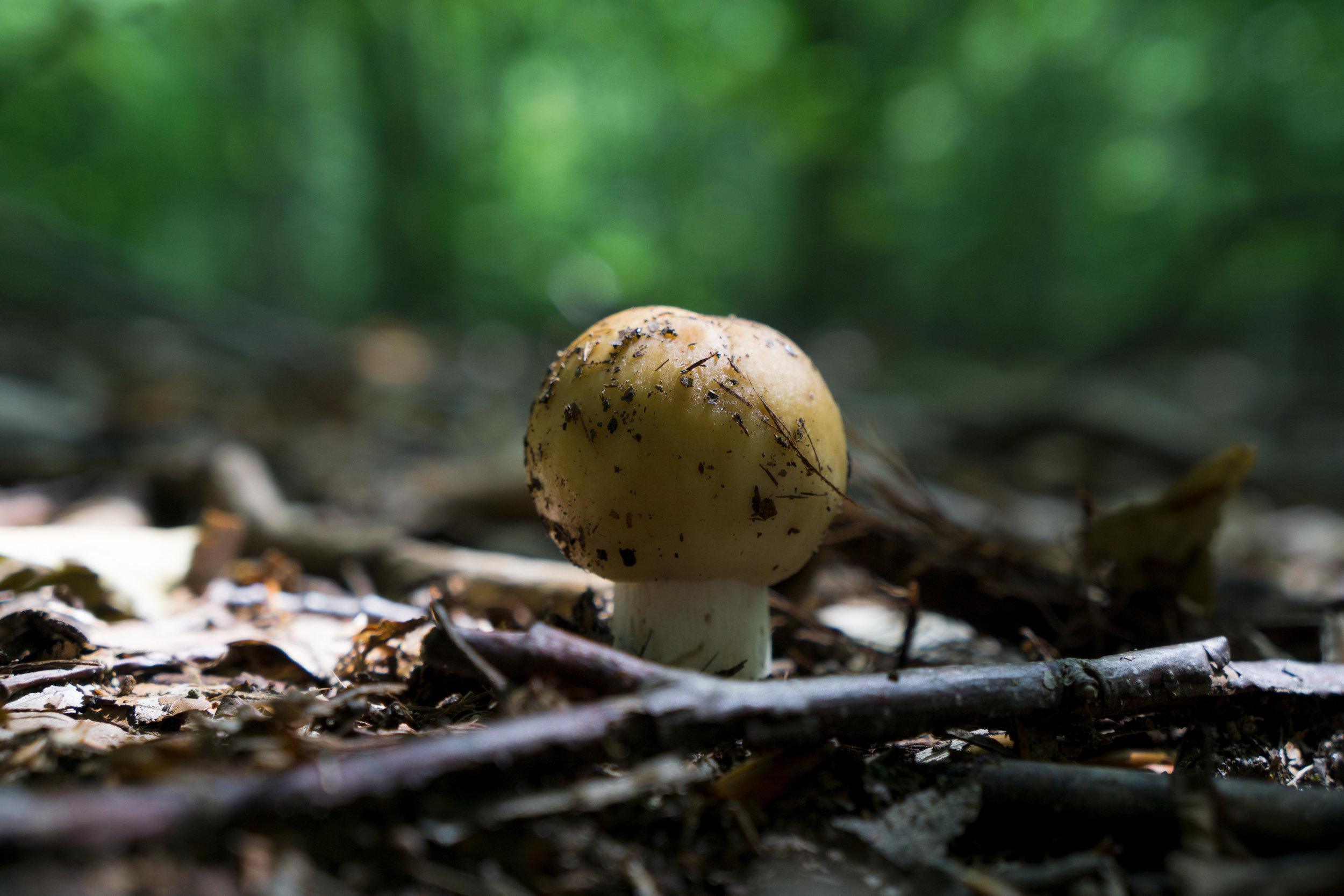 vickygood_photography_nature_mushroom4.jpg