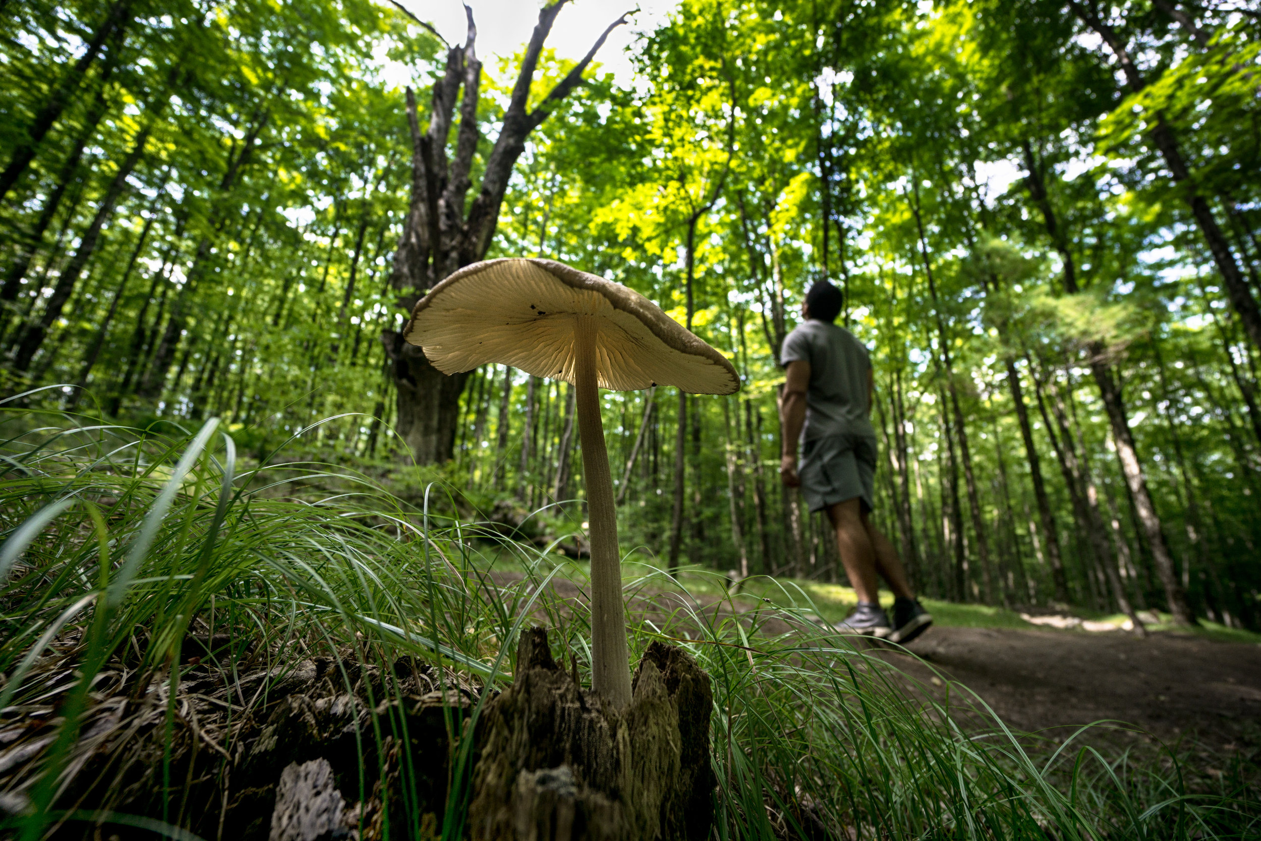 vickygood_photography_nature_mushroom1.jpg