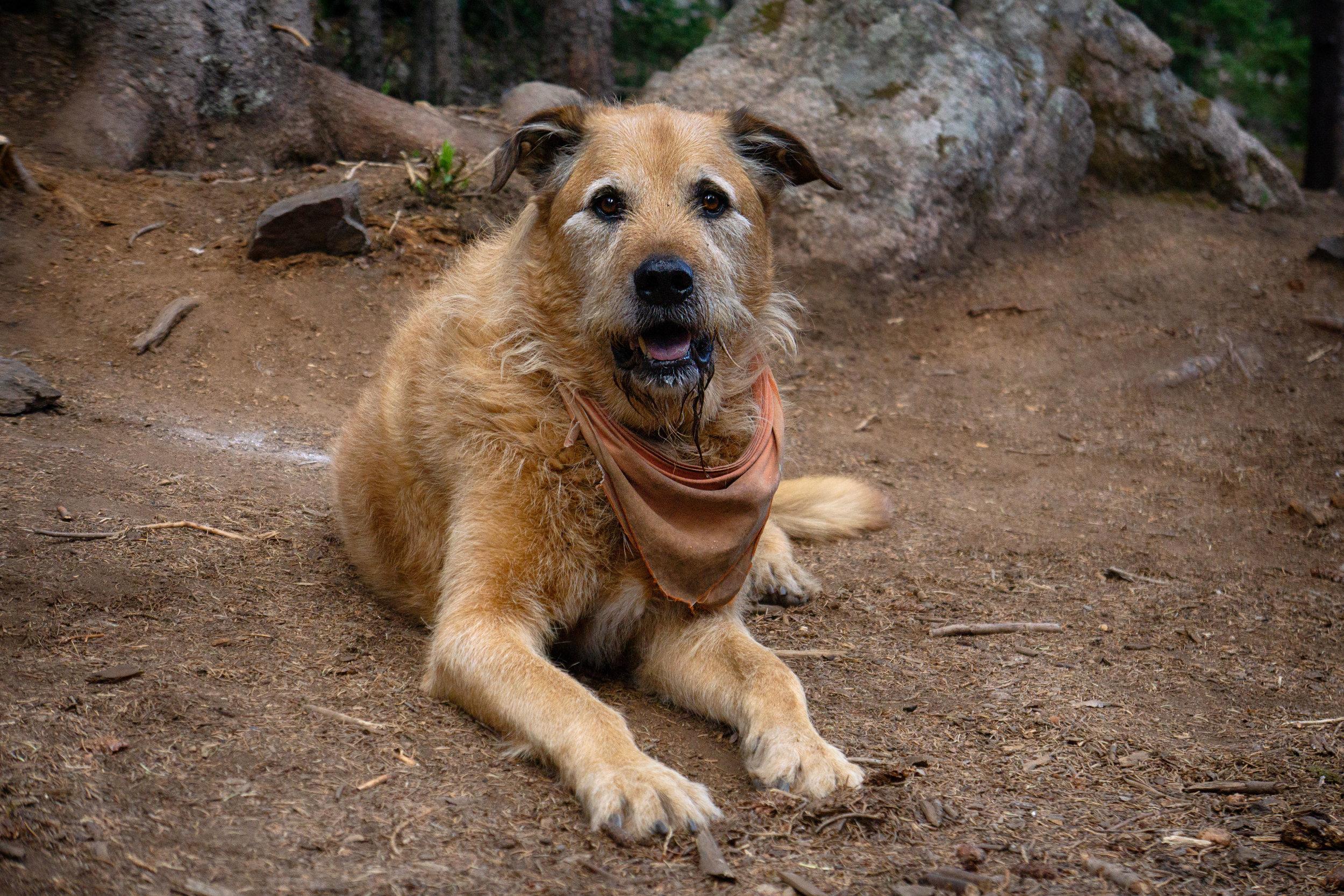 vickygood_travel_photography_colorado_dog_series1.2.jpg