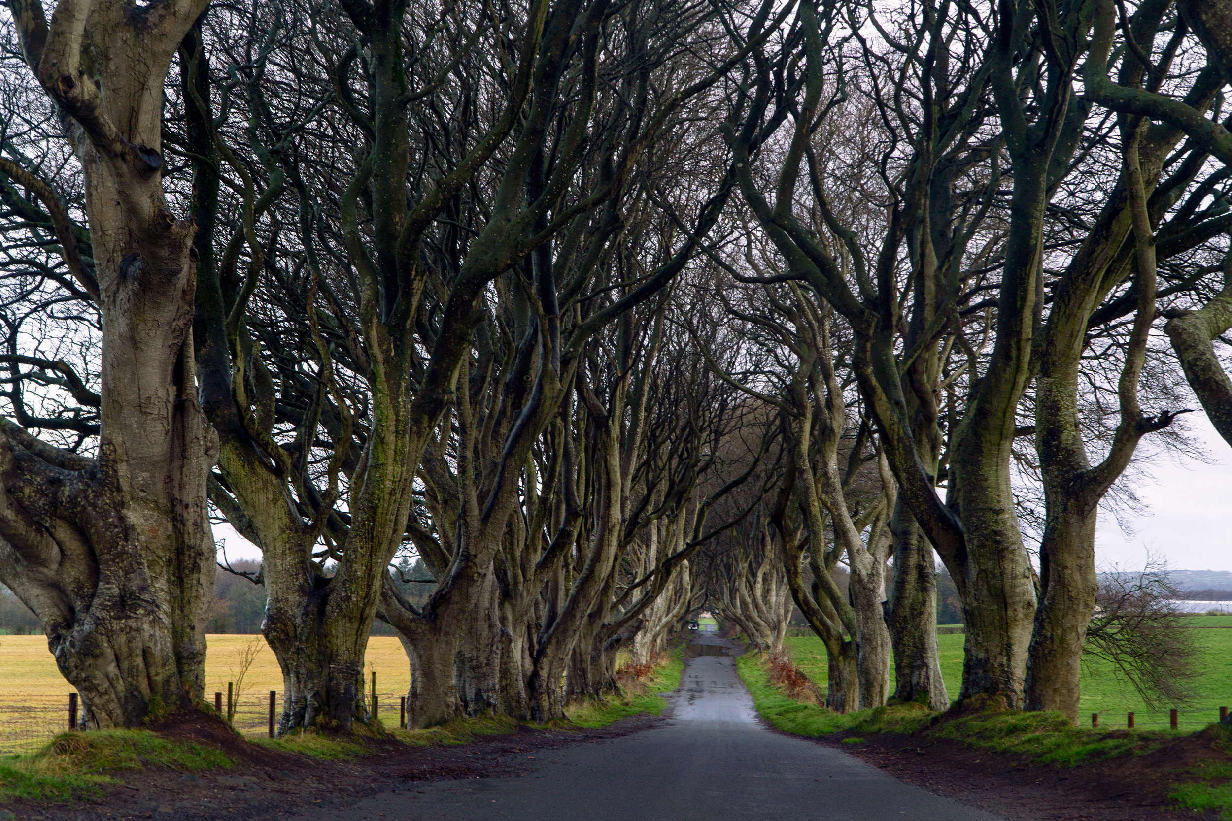 northern_Ireland_the_dark_hedges_vickugood_travel_photography_sm.jpg