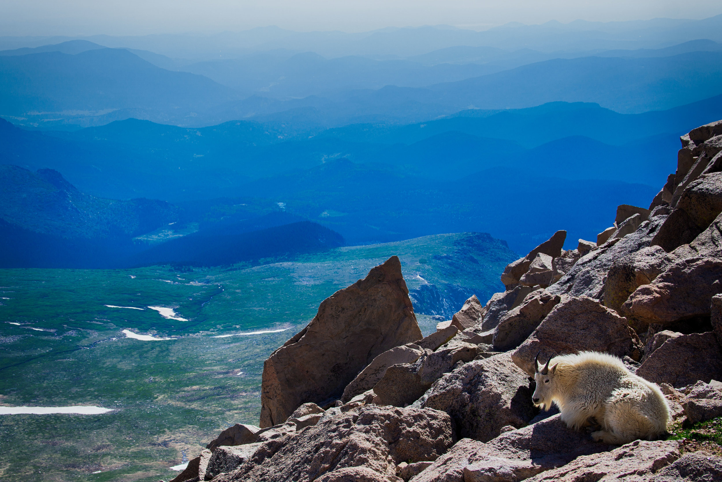 vickygood_travel_photography_colorado_mt.evans_goats2.jpg