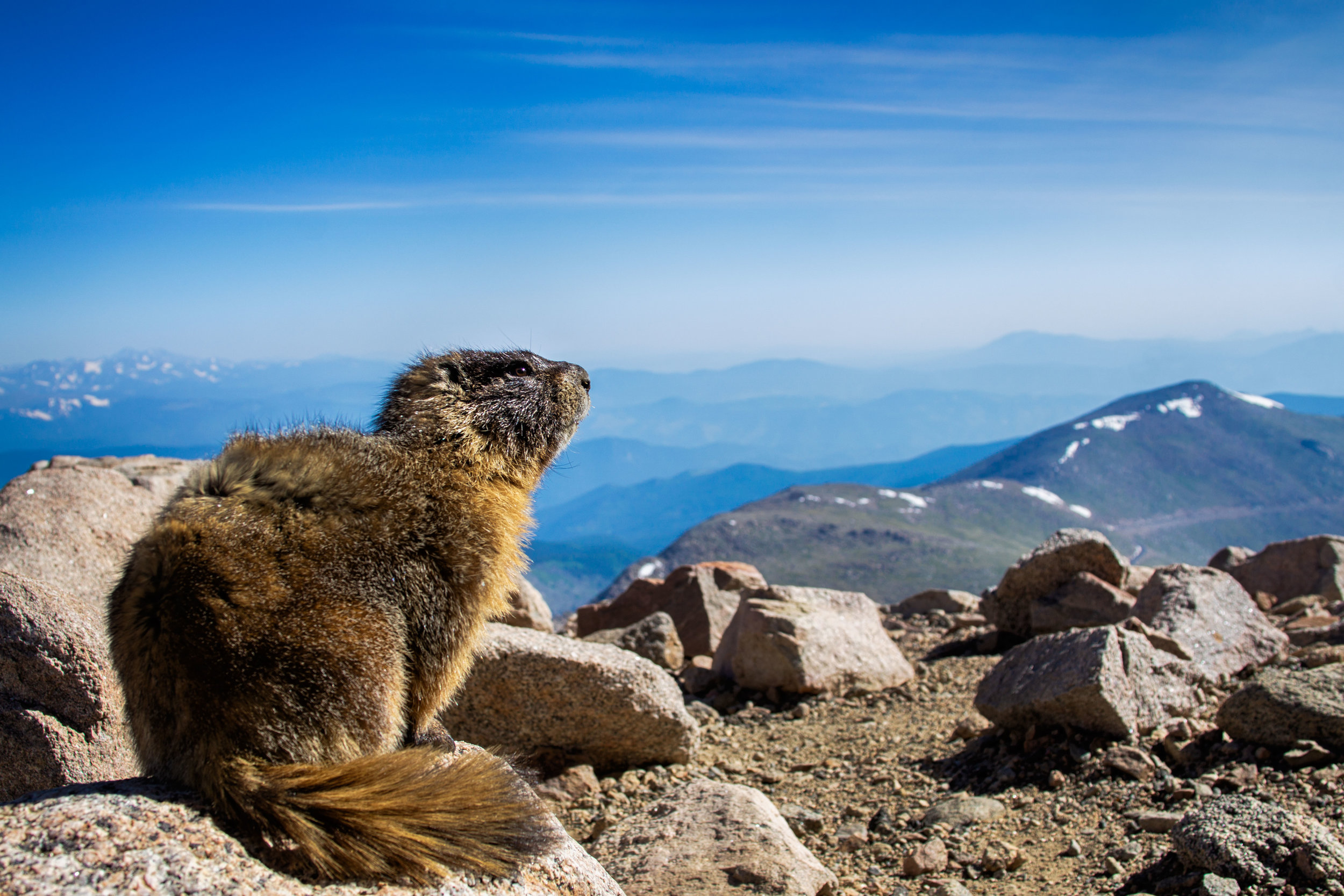 vickygood_travel_photography_colorado_mt.evans3.jpg