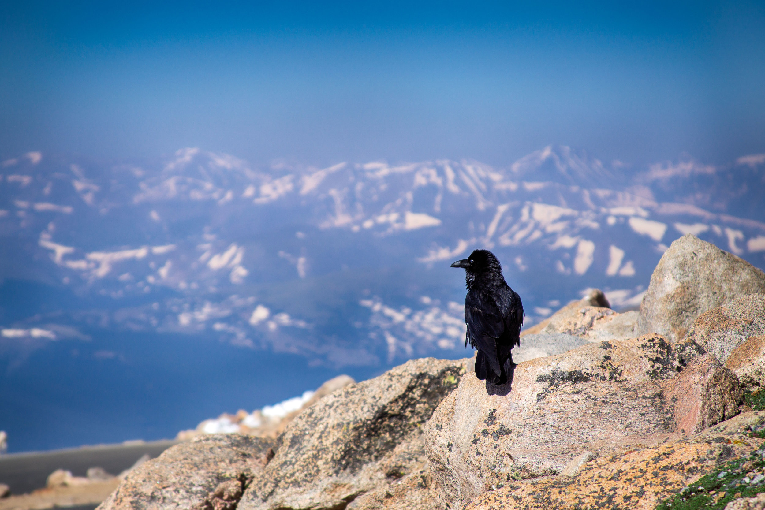 vickygood_travel_photography_colorado_mt.evans4.jpg