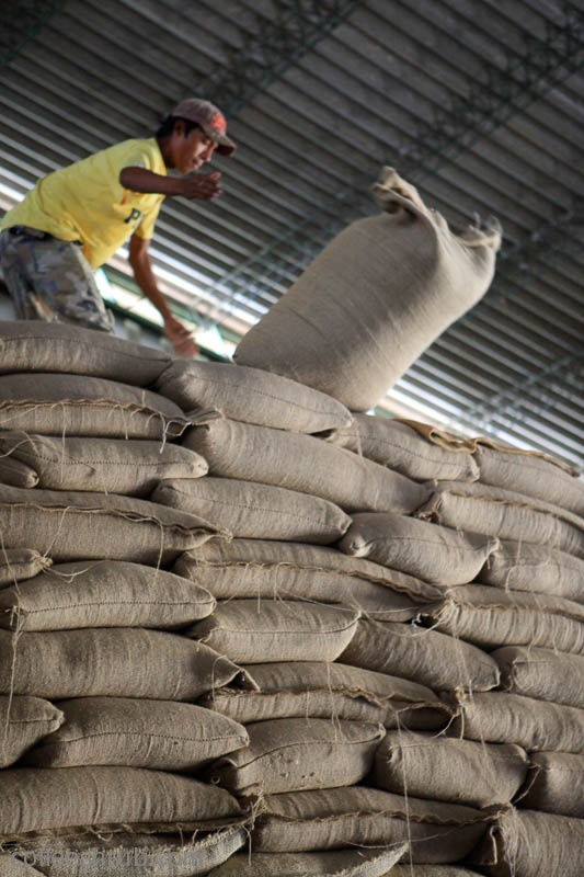 Stacking bags of raw, green coffee ready for export.