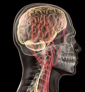 The complexity of the nervous system makes the proposed procedure risky.