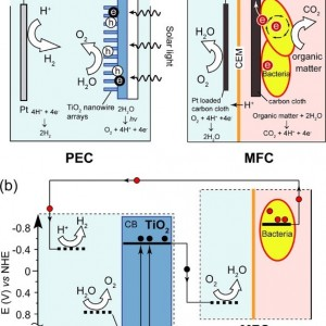 This is a schematic diagram of the PEC-MFC self-driven solar microbial device.