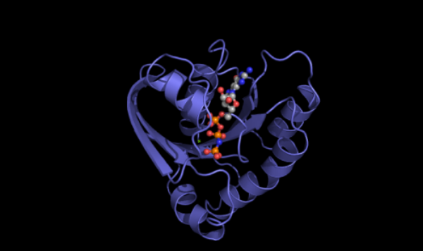The Ras protein: the beating heart of cancer. Photo courtesy of Dr. Channing Der.