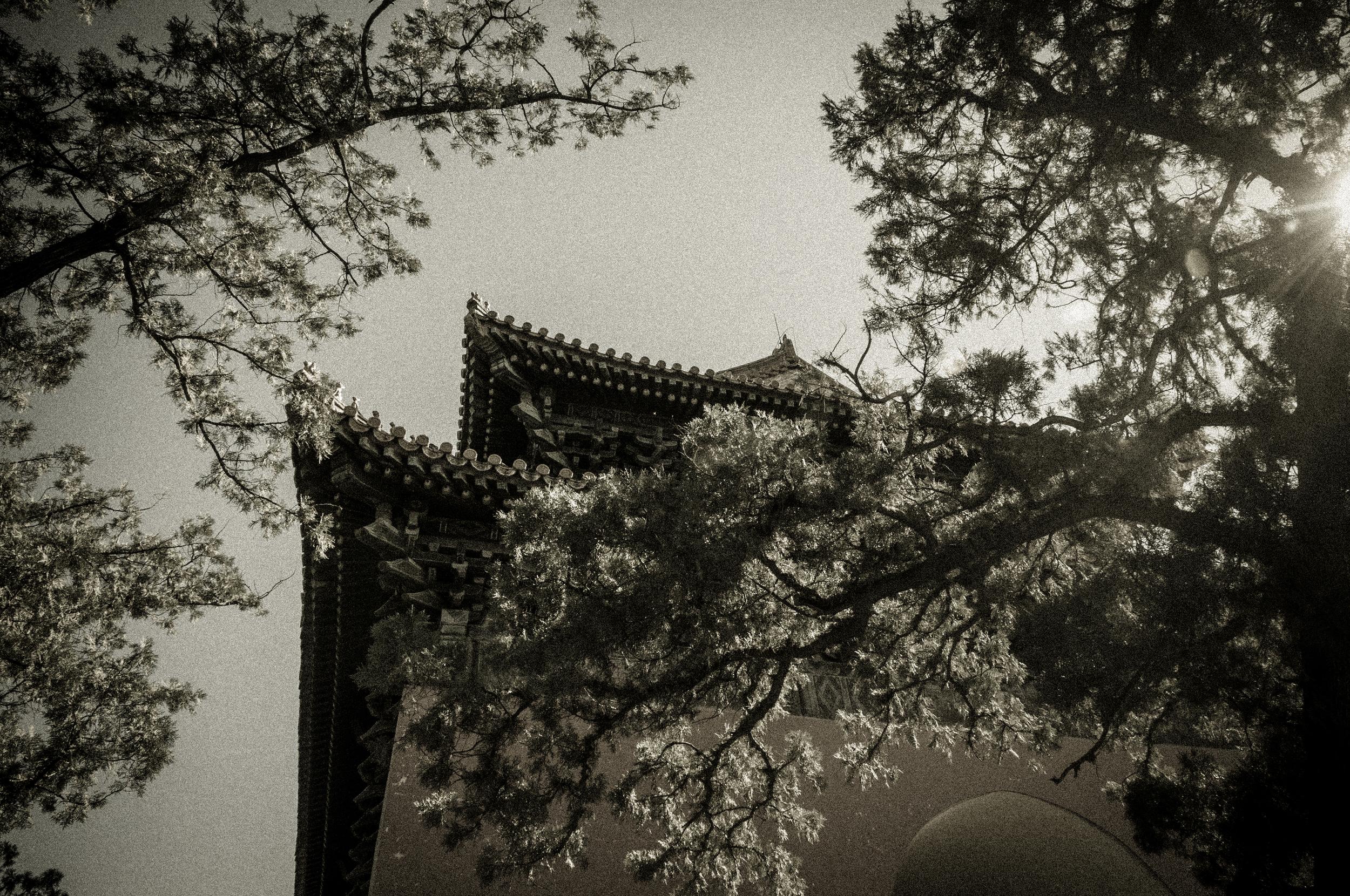 China-311.jpg