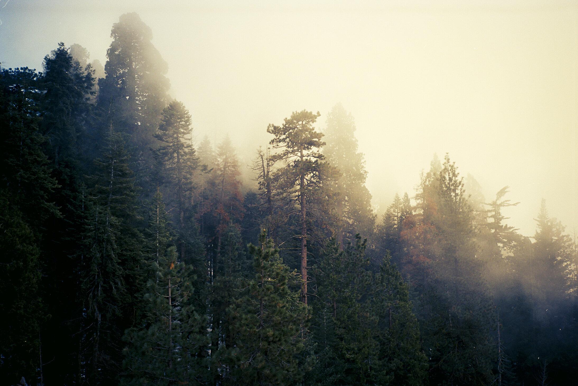 JAW_SequoiaFilm-3ps.jpg