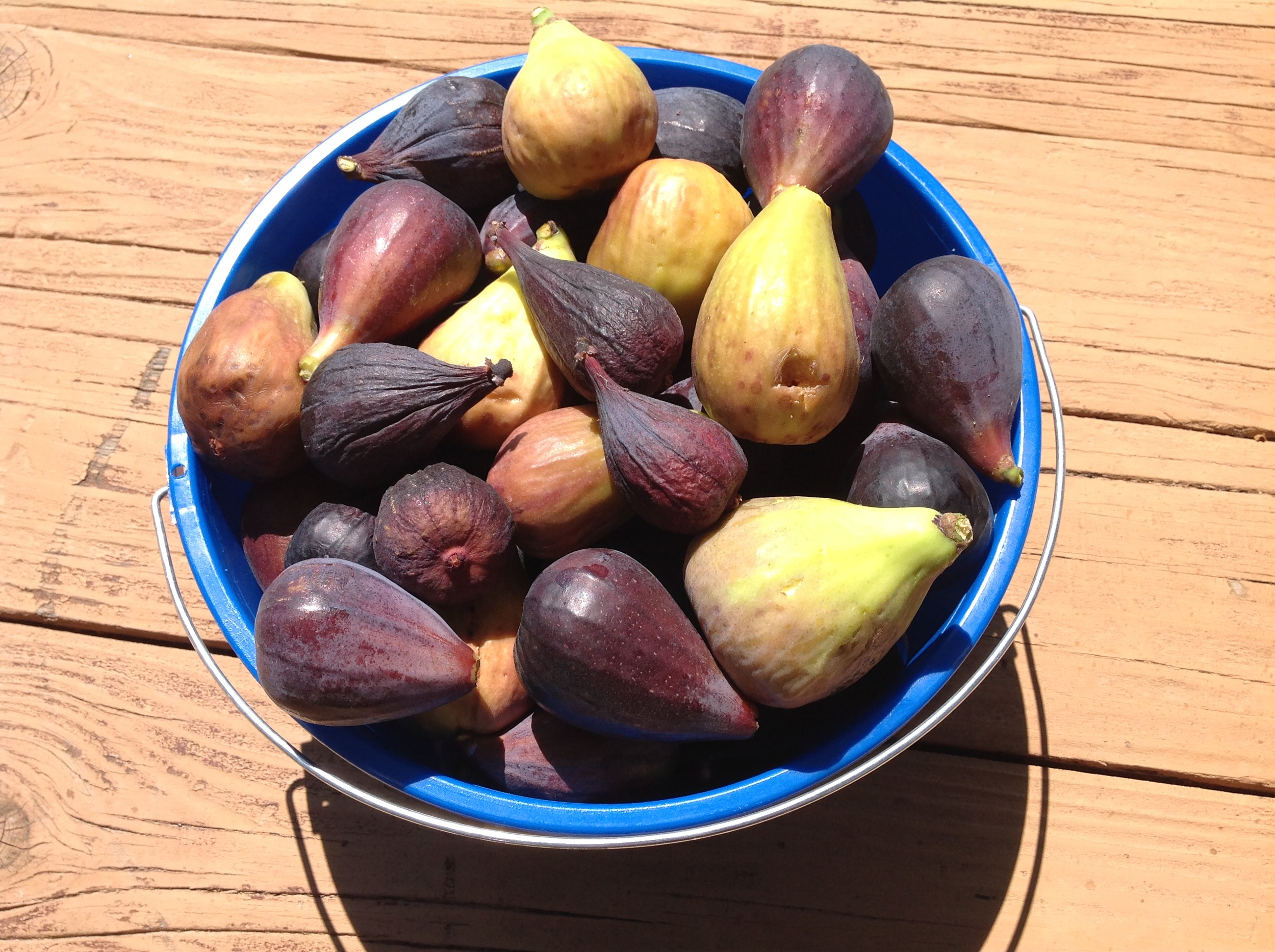 Fresh figs from Wilkerson