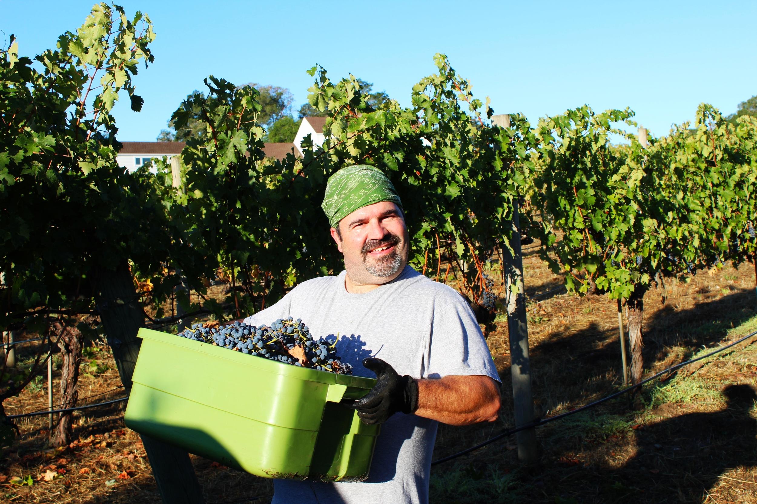 Picker, Winemaker and Owner, David Scheidt