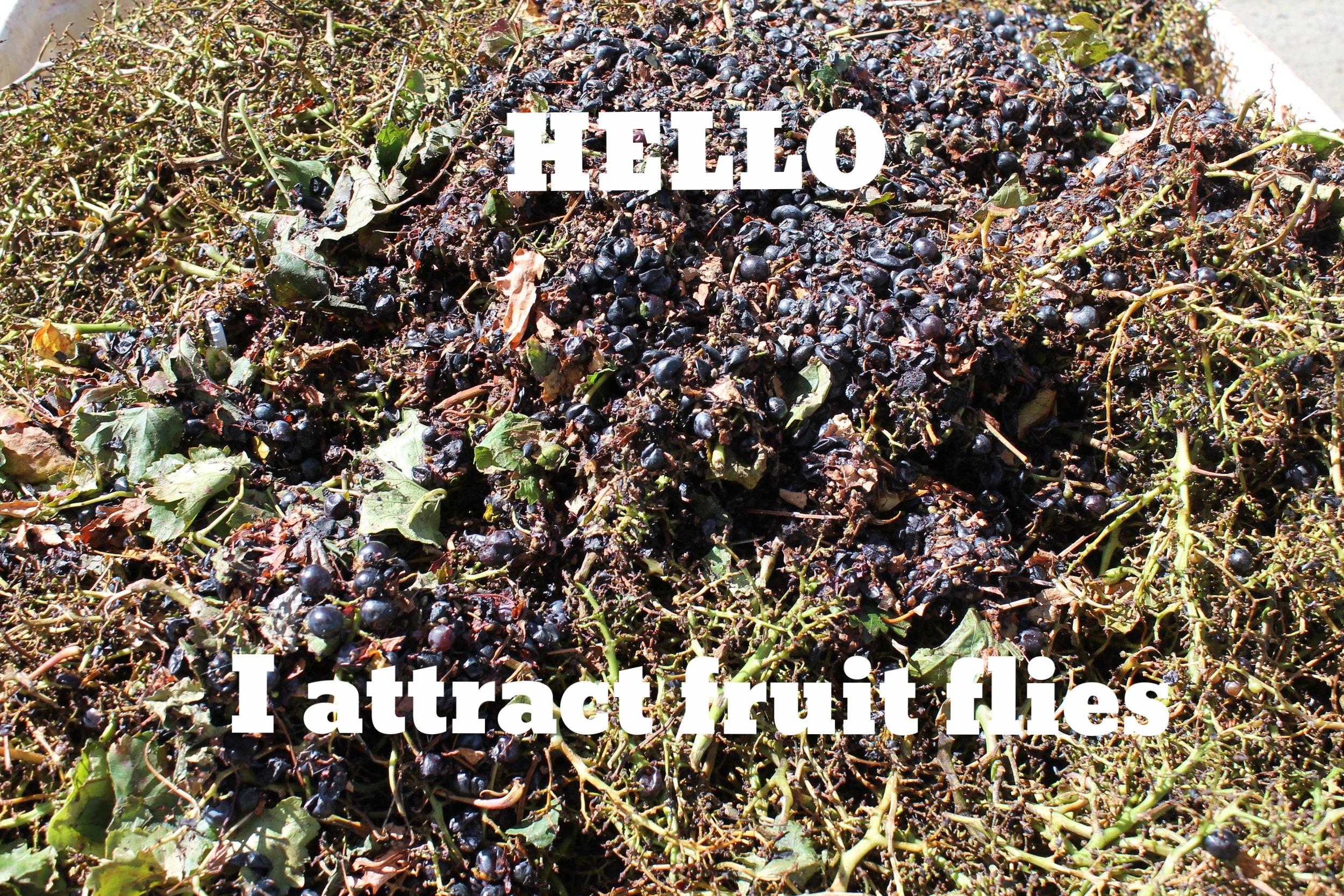 I hate fruit flies