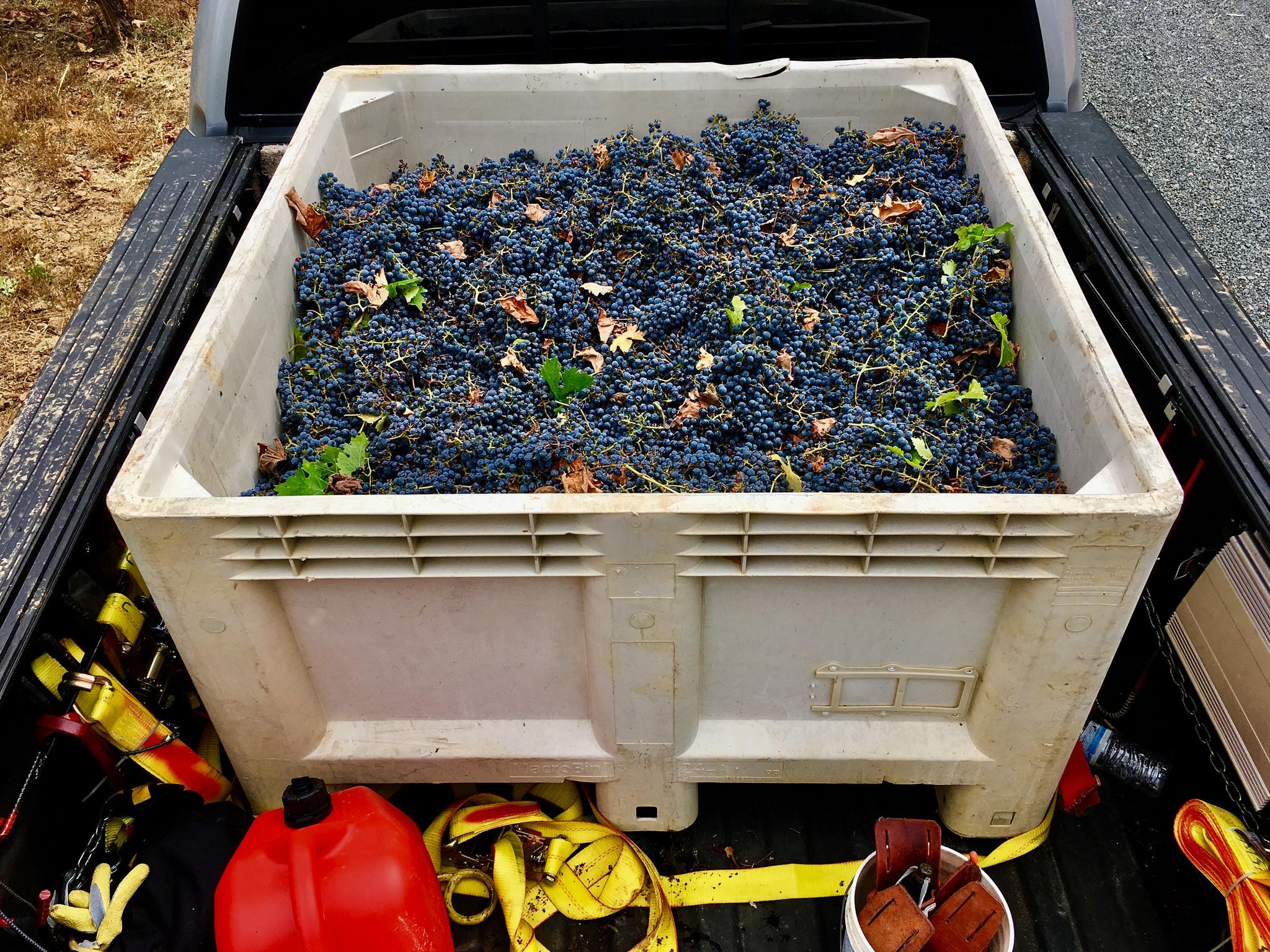 Lencioni Vineyard Dry Farmed Cabernet Sauvignon