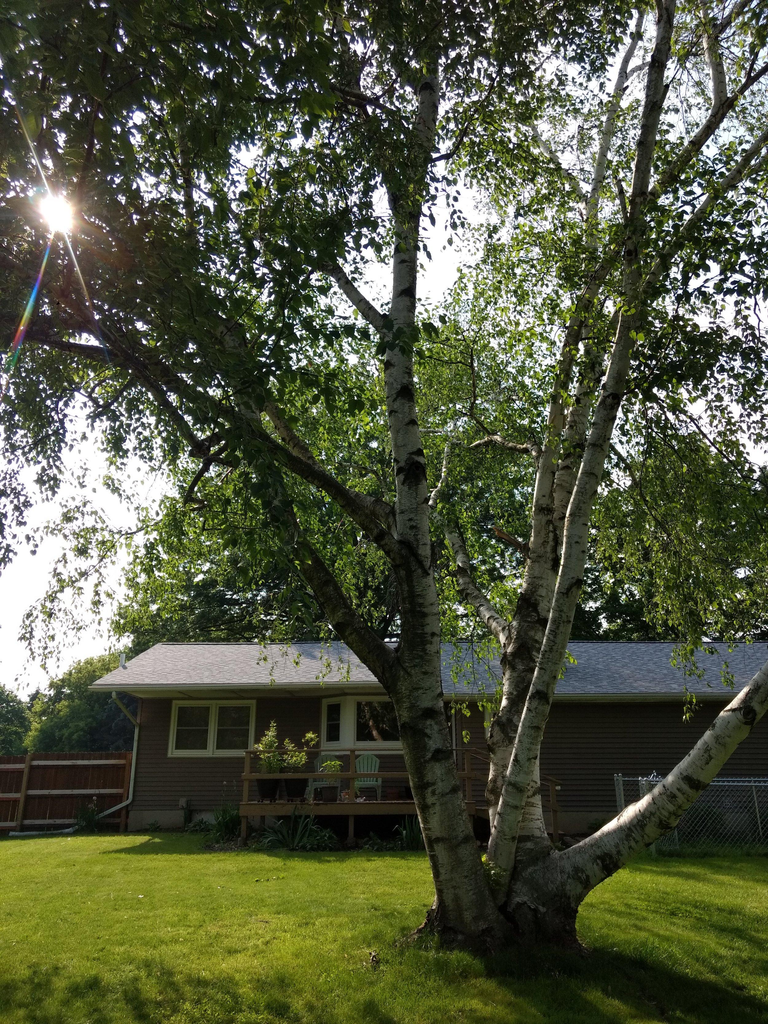 New Roof! Backyard Bliss