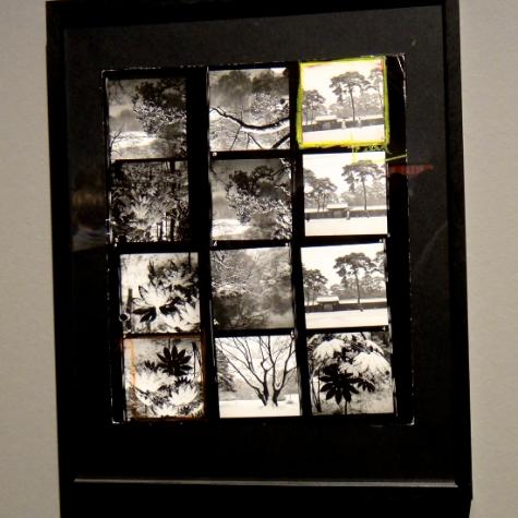 Japanese Trees by Warner Bischof