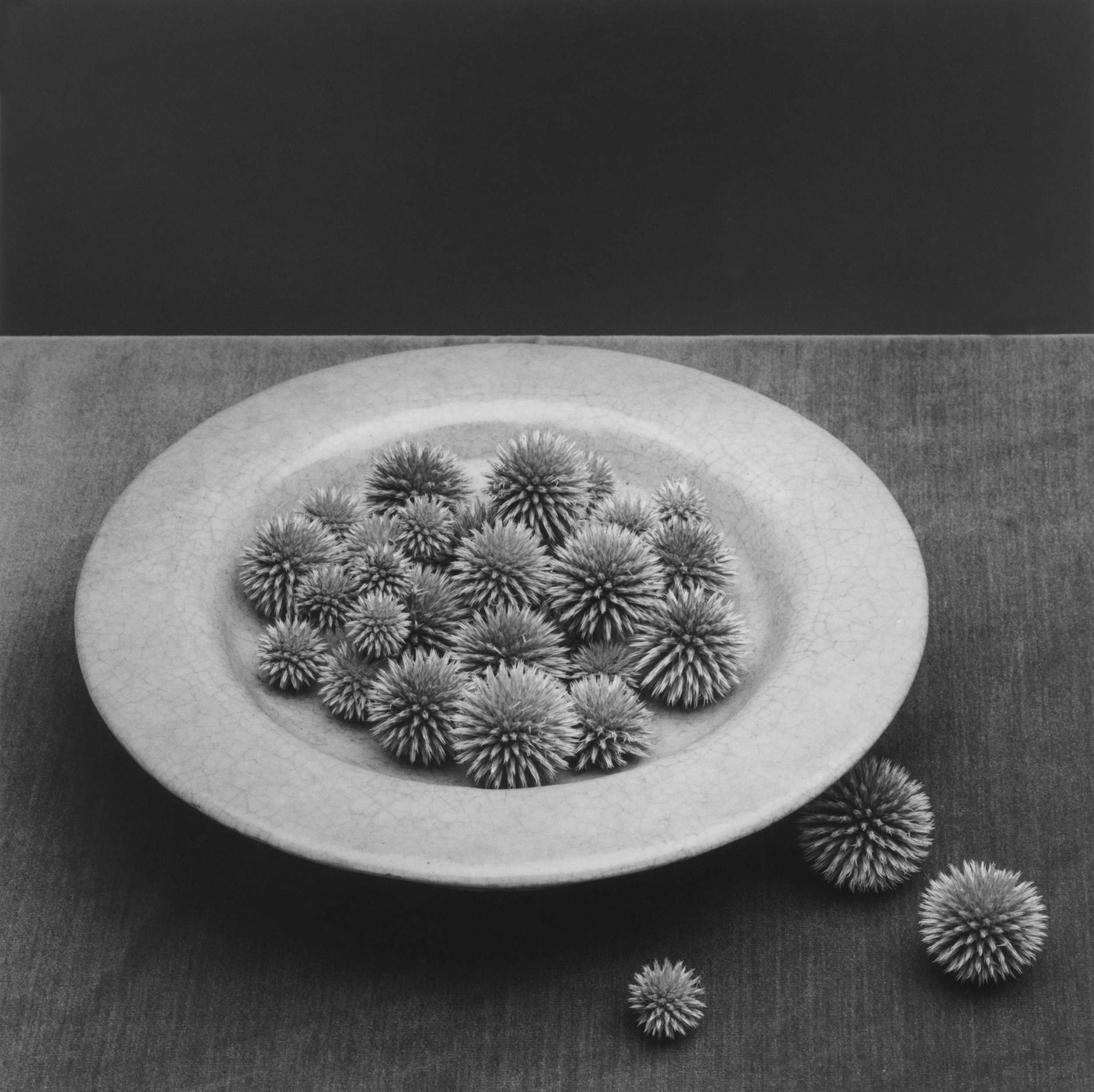 Pods  1985 © Robert Mapplethorpe Foundation. Used by permission Courtesy Alison Jacques Gallery