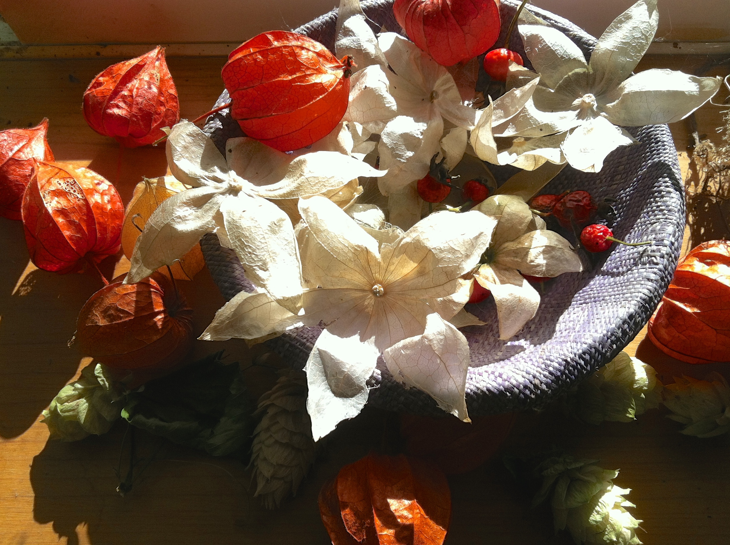 Fall gleanings to feed my inner child