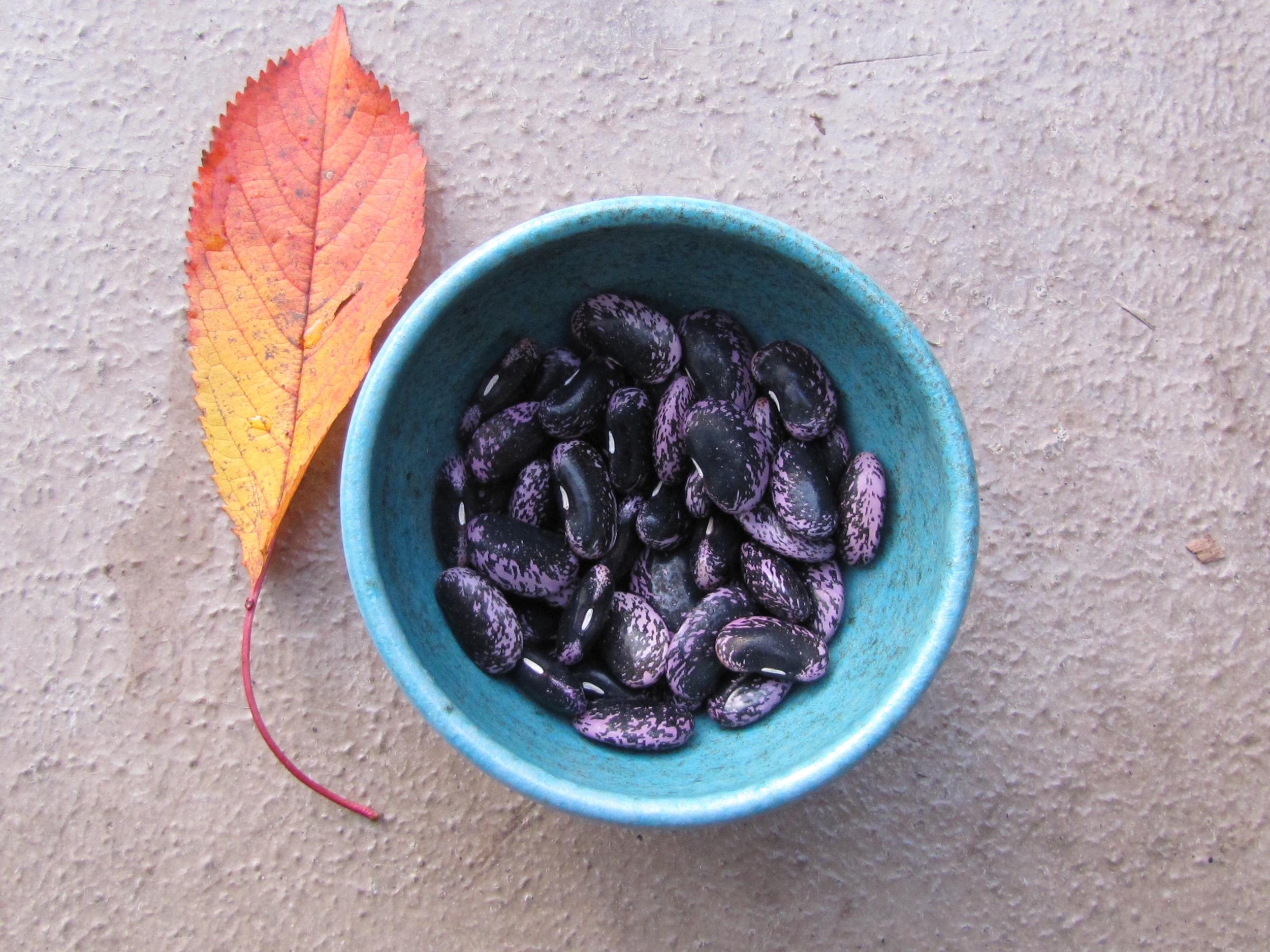 Magical Scarlet Emperor beans