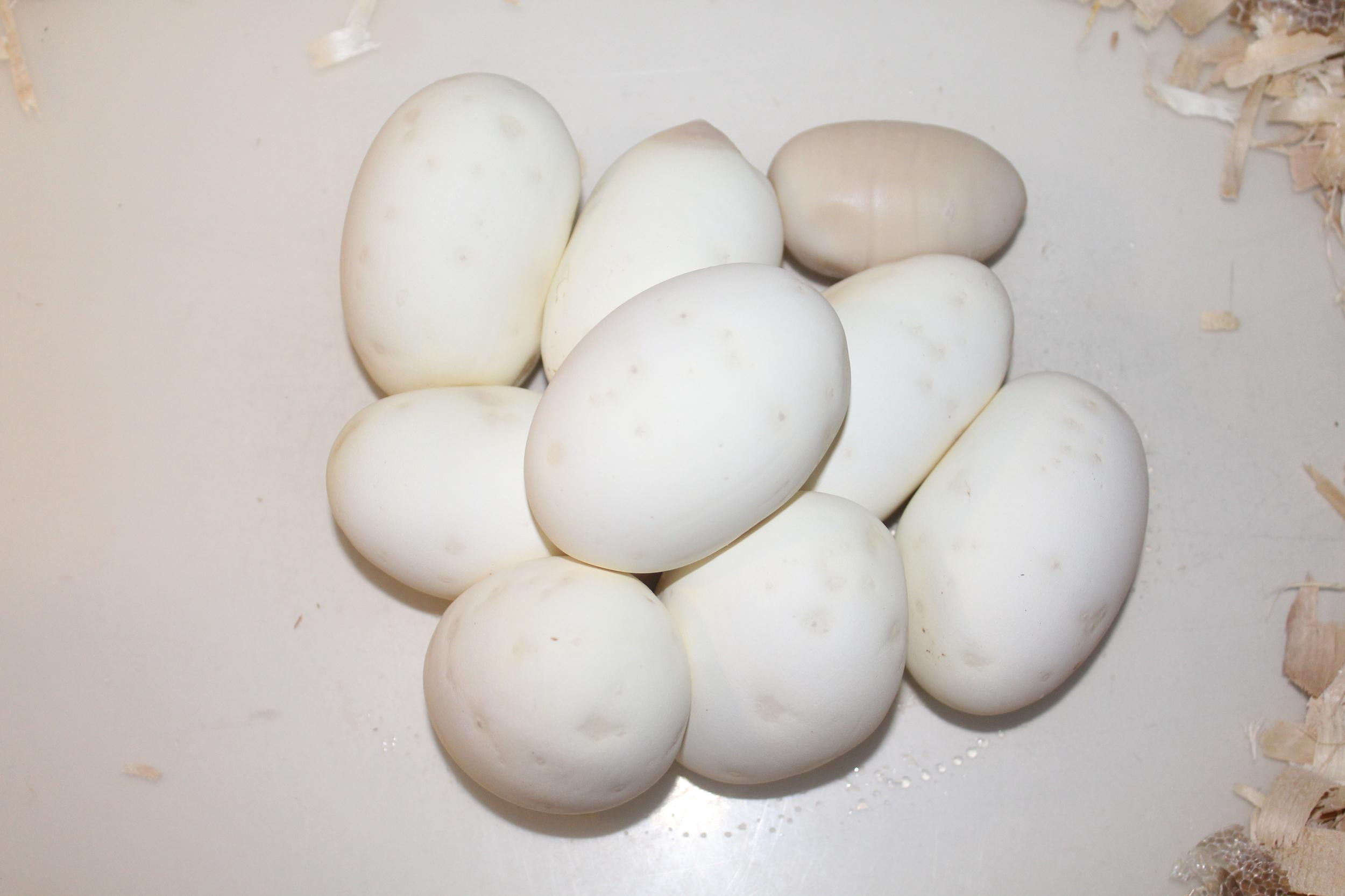 8 Good eggs and one slug