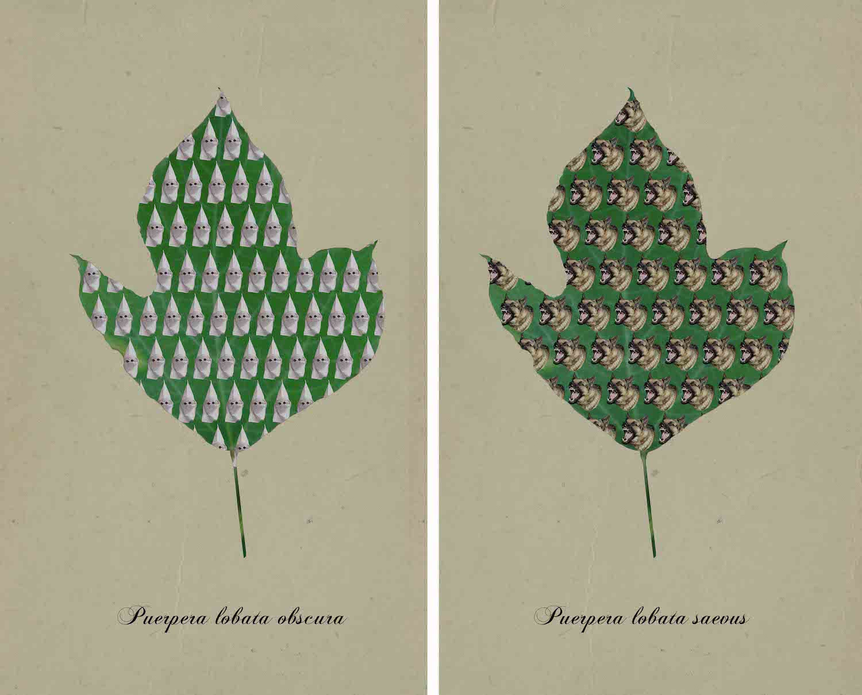 Kudzu Botanical Prints - Nell Gottlieb