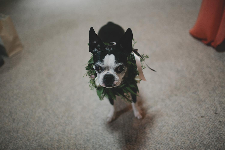 Aldo Leopold Nature Center Wedding _0022.jpg