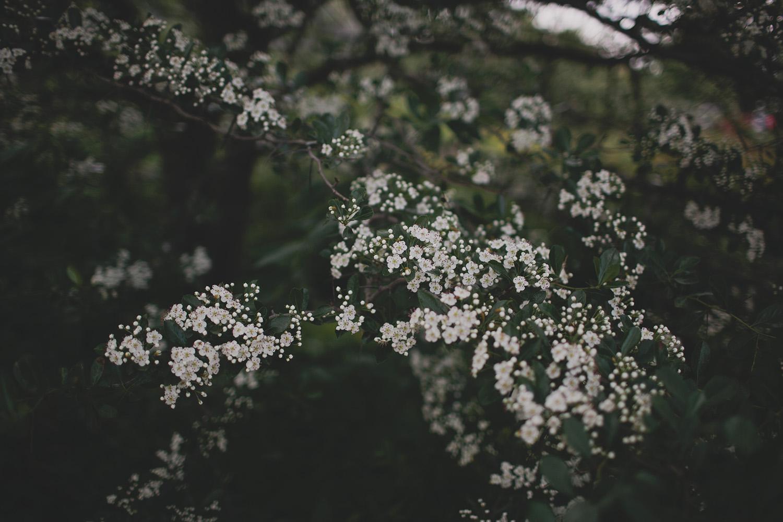 Olbrich Gardens Wedding_0001.jpg